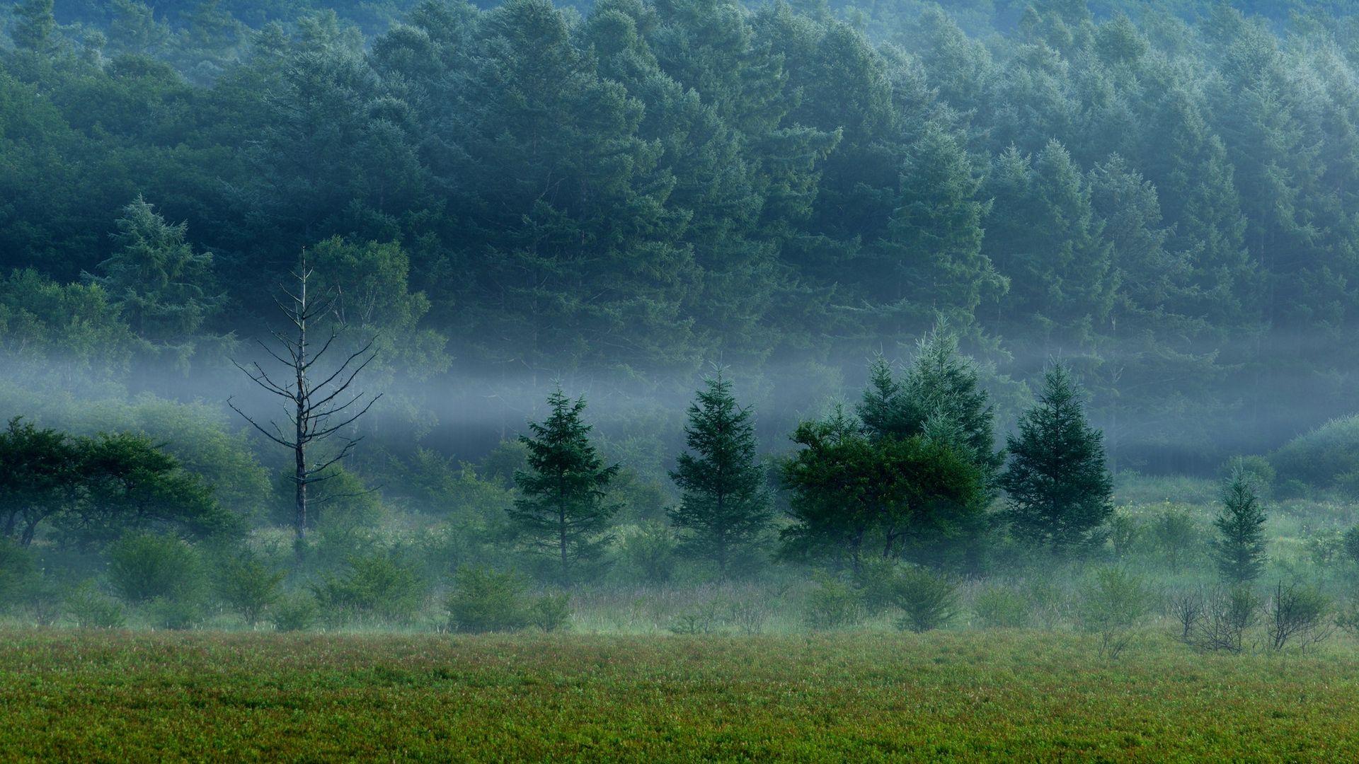 Foggy Forest full screen hd wallpaper