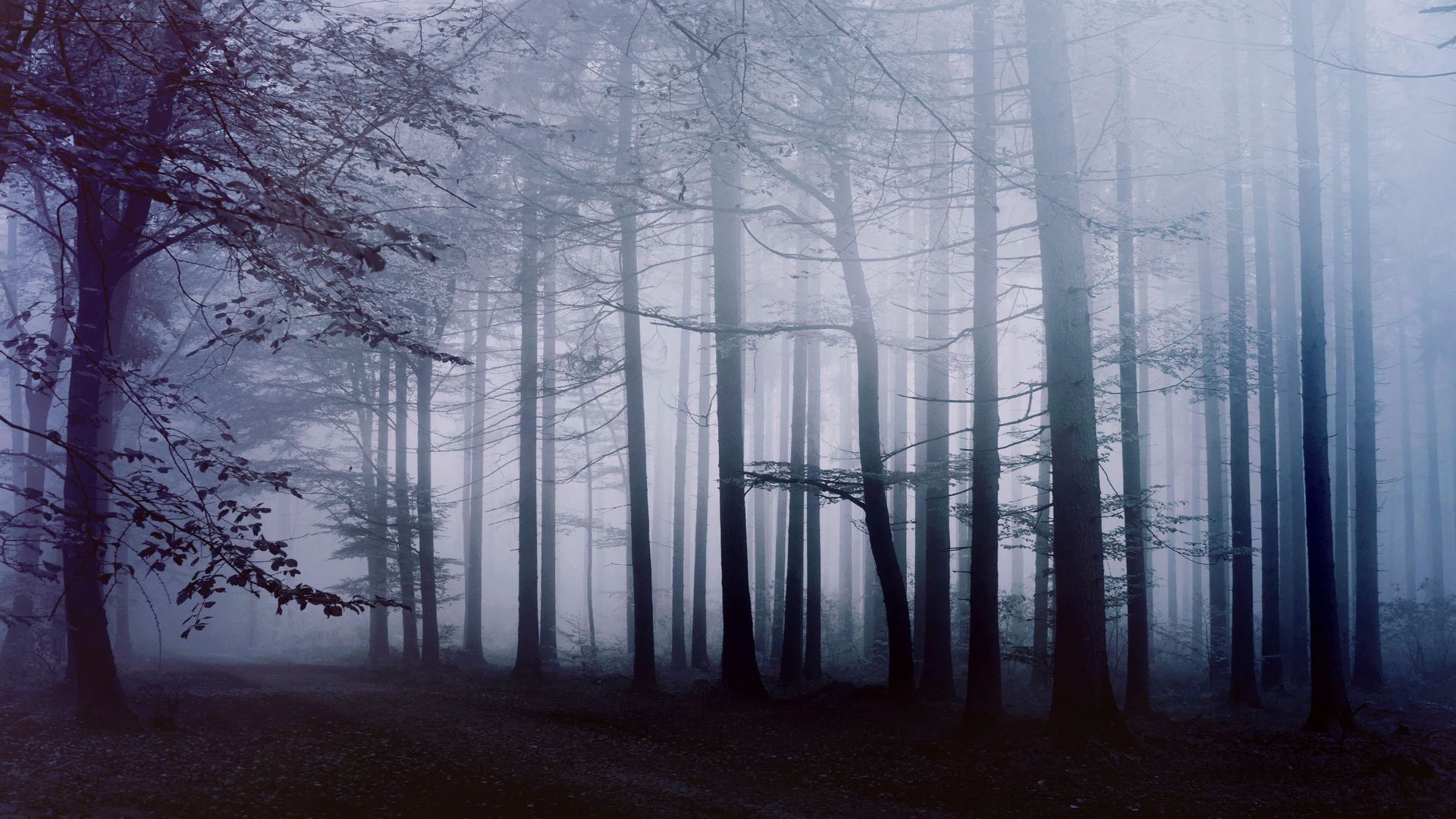 Foggy Forest 1080p Wallpaper