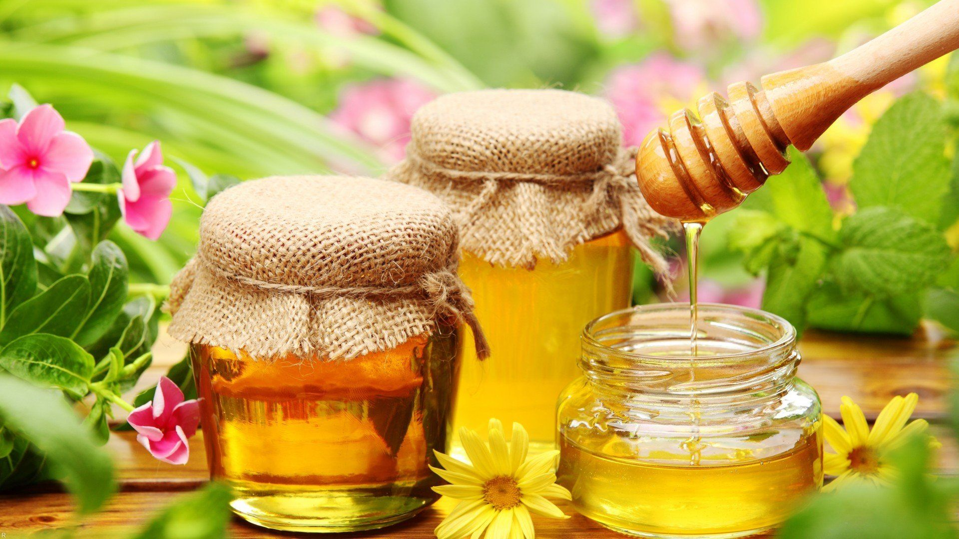 Honey download free wallpapers for pc in hd