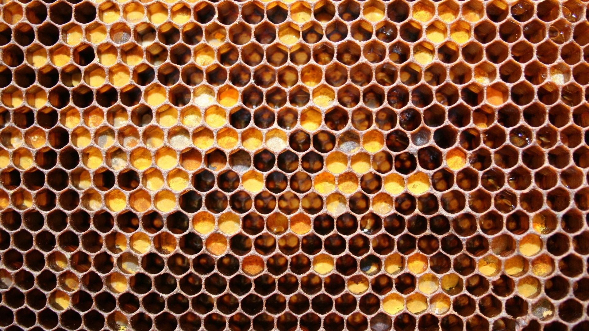 Honey wallpaper and themes