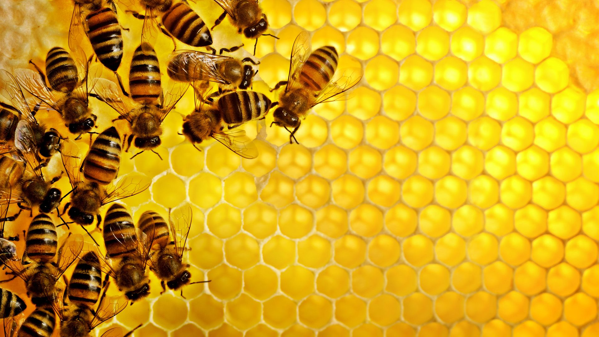 Honey Free Desktop Wallpaper