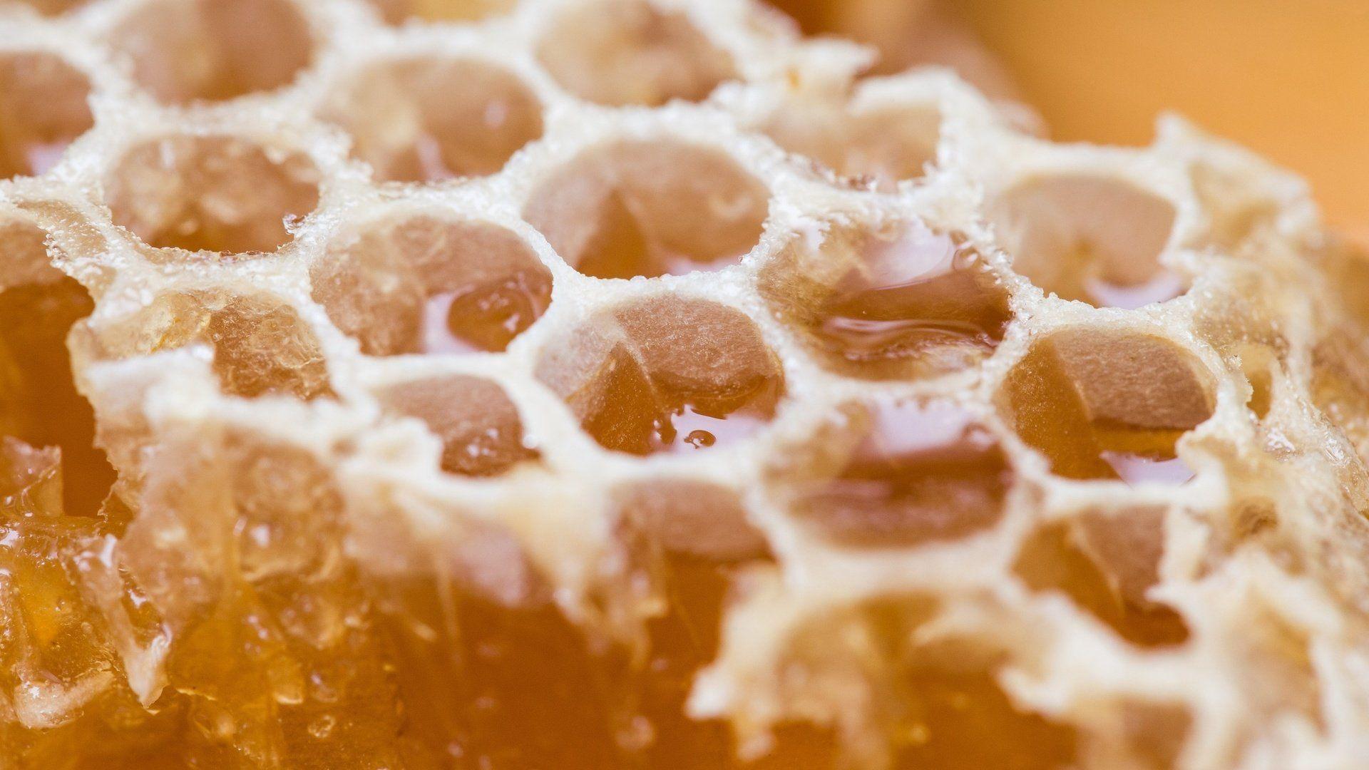 Honey download wallpaper image