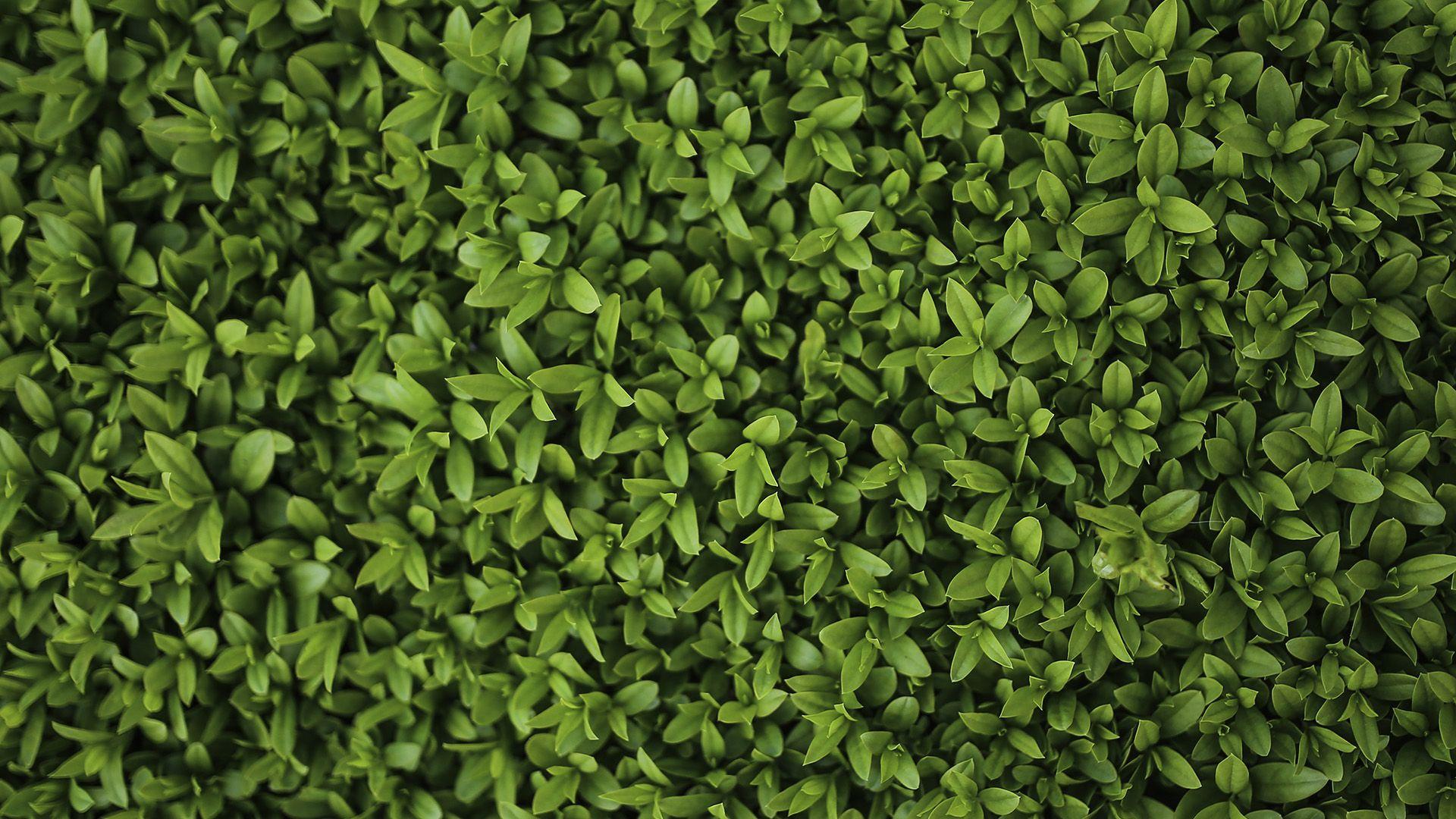 Leaf Pattern good wallpaper hd