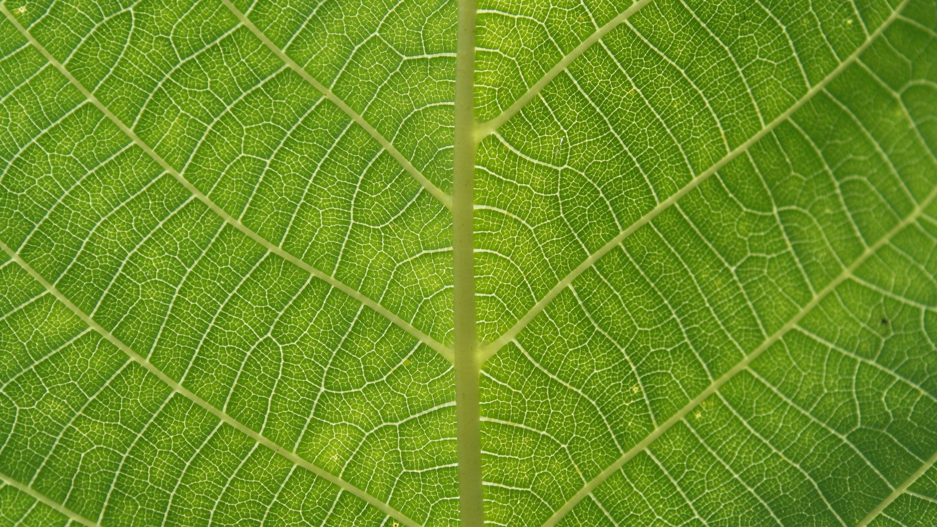 Leaf Pattern full wallpaper