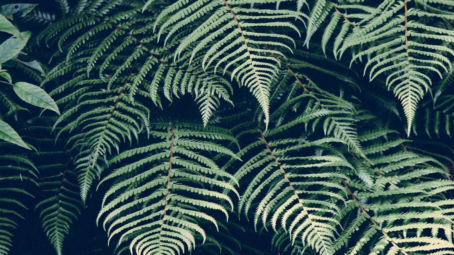 Leaf Pattern 1920x1080 wallpaper
