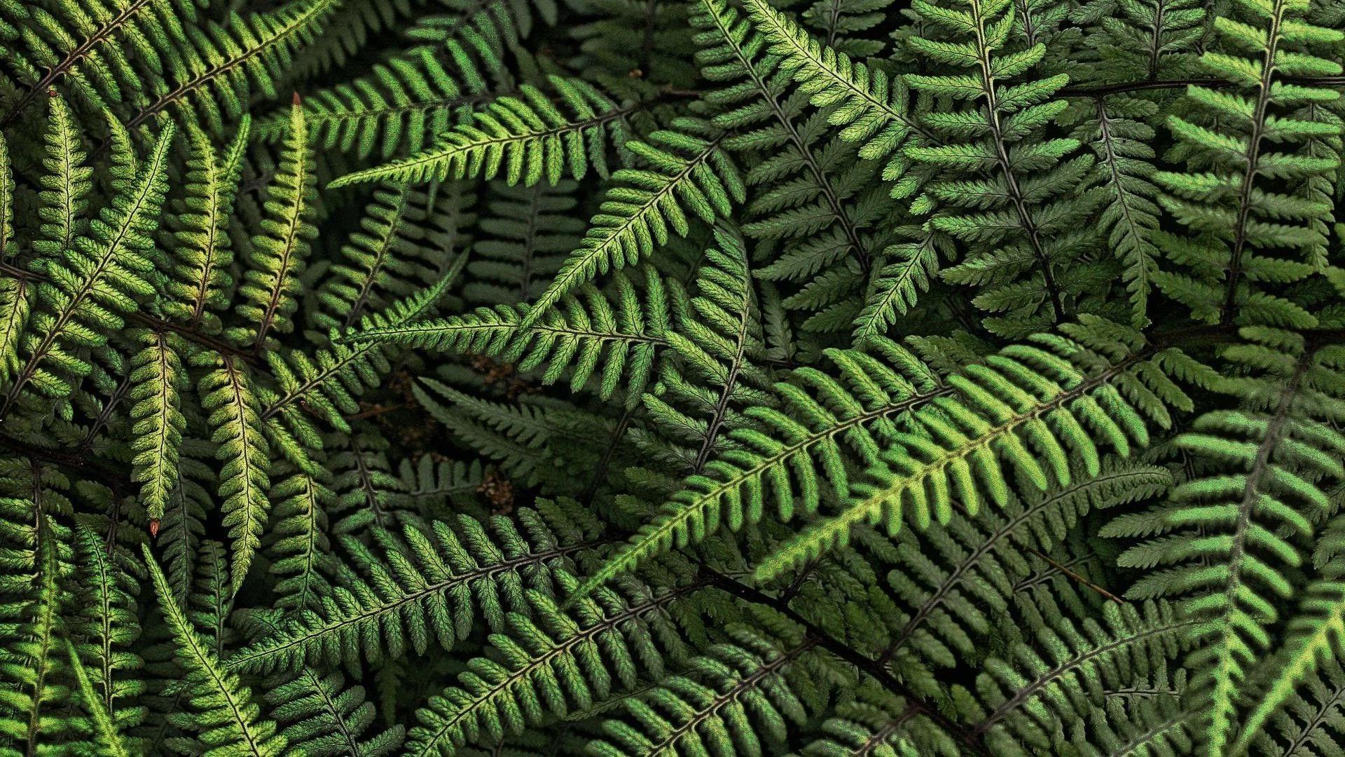 Leaf Pattern wallpaper photo full hd