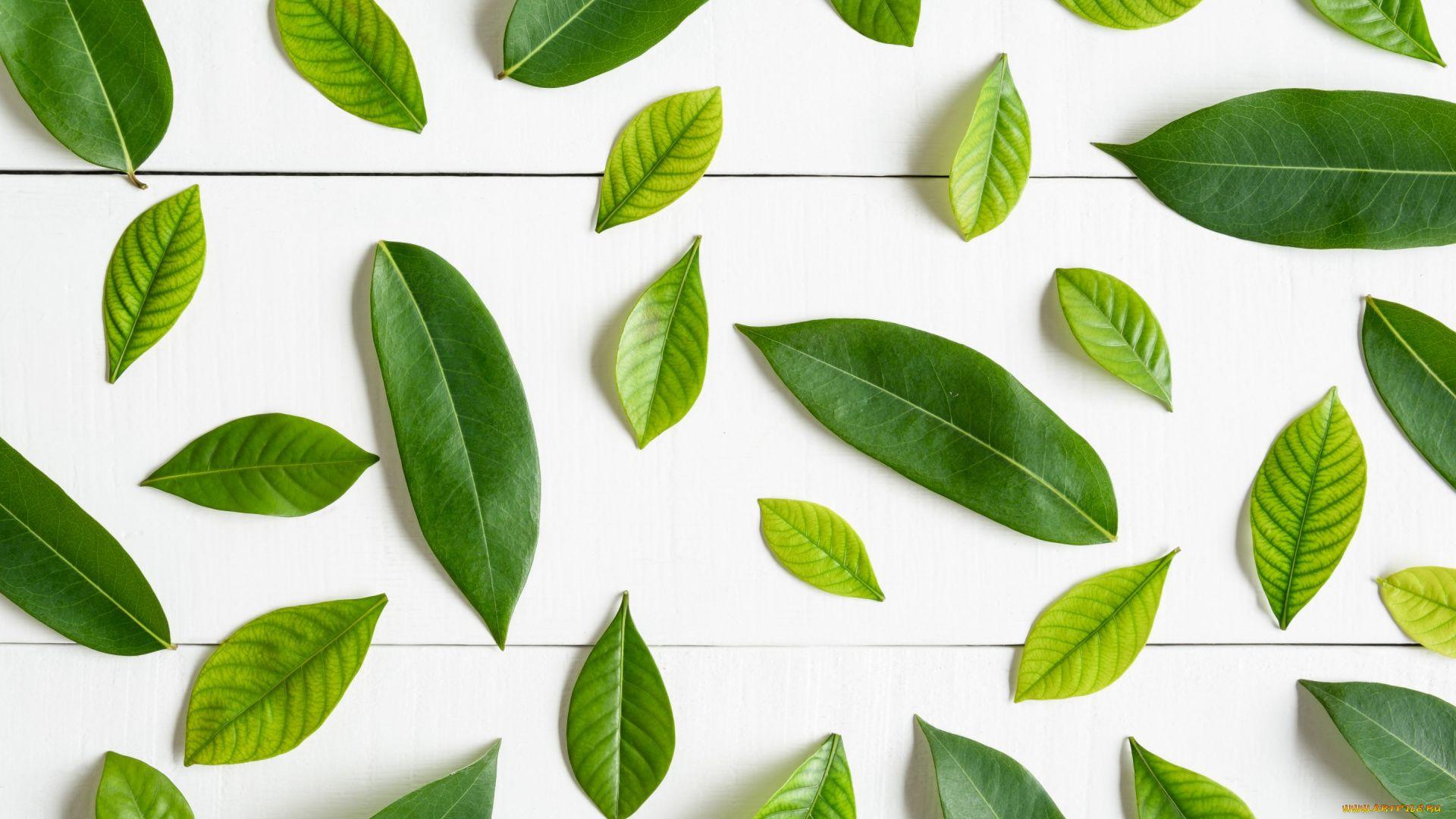 Leaf Pattern pc wallpaper