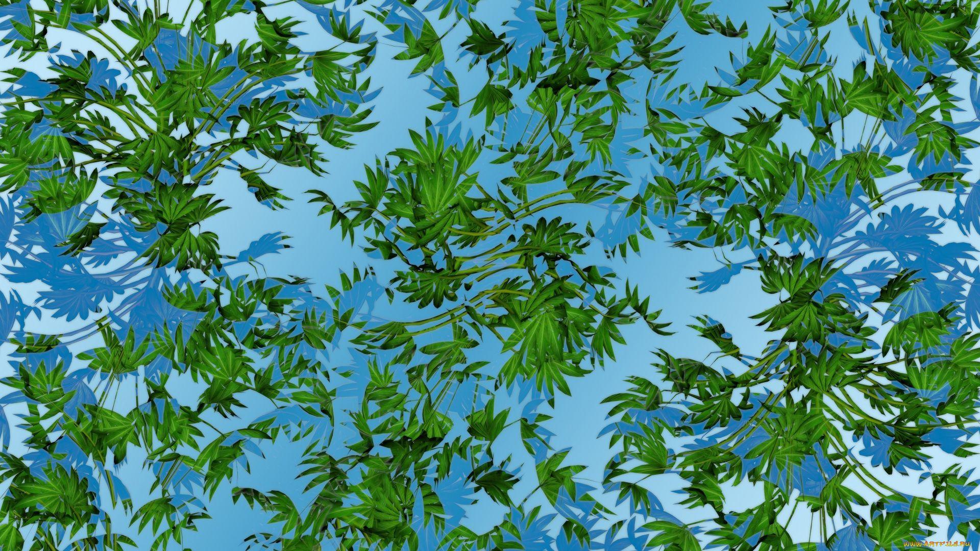 Leaf Pattern Pic
