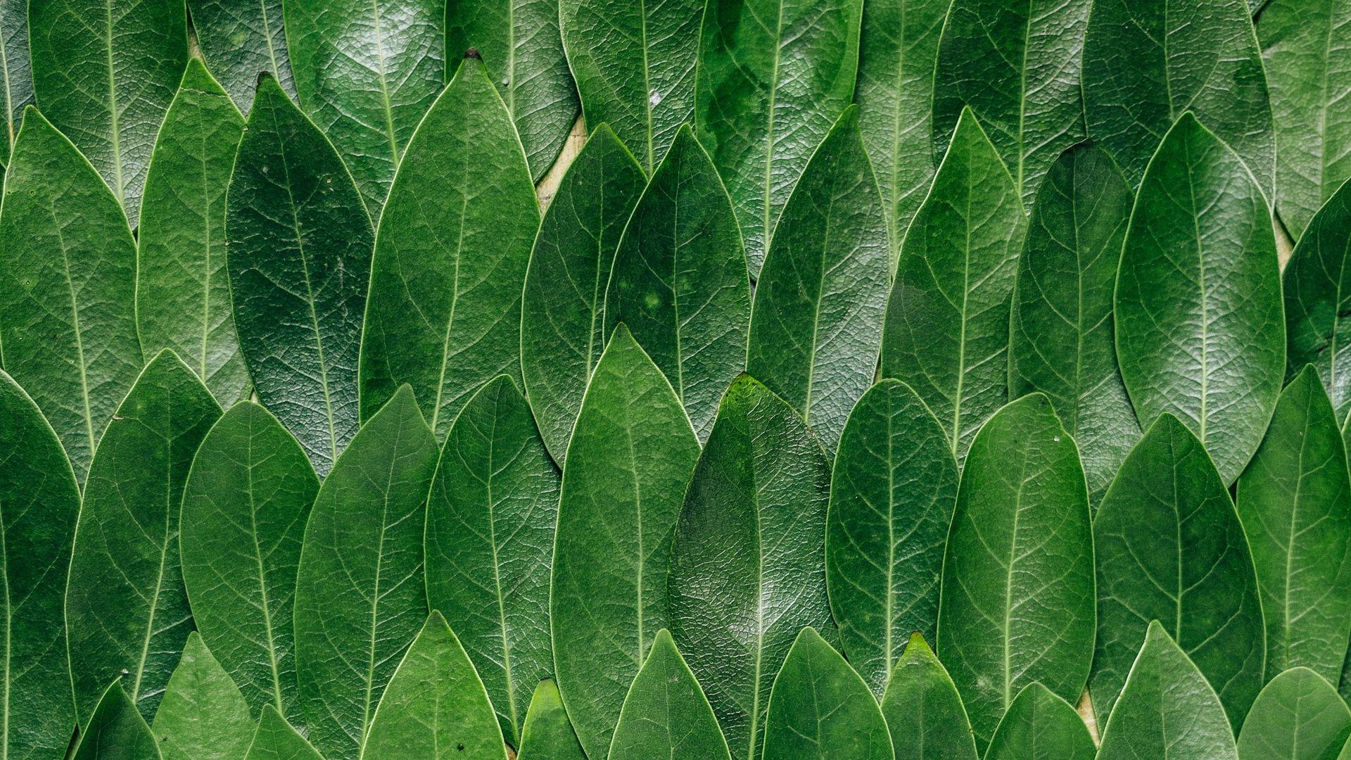 Leaf Pattern background wallpaper