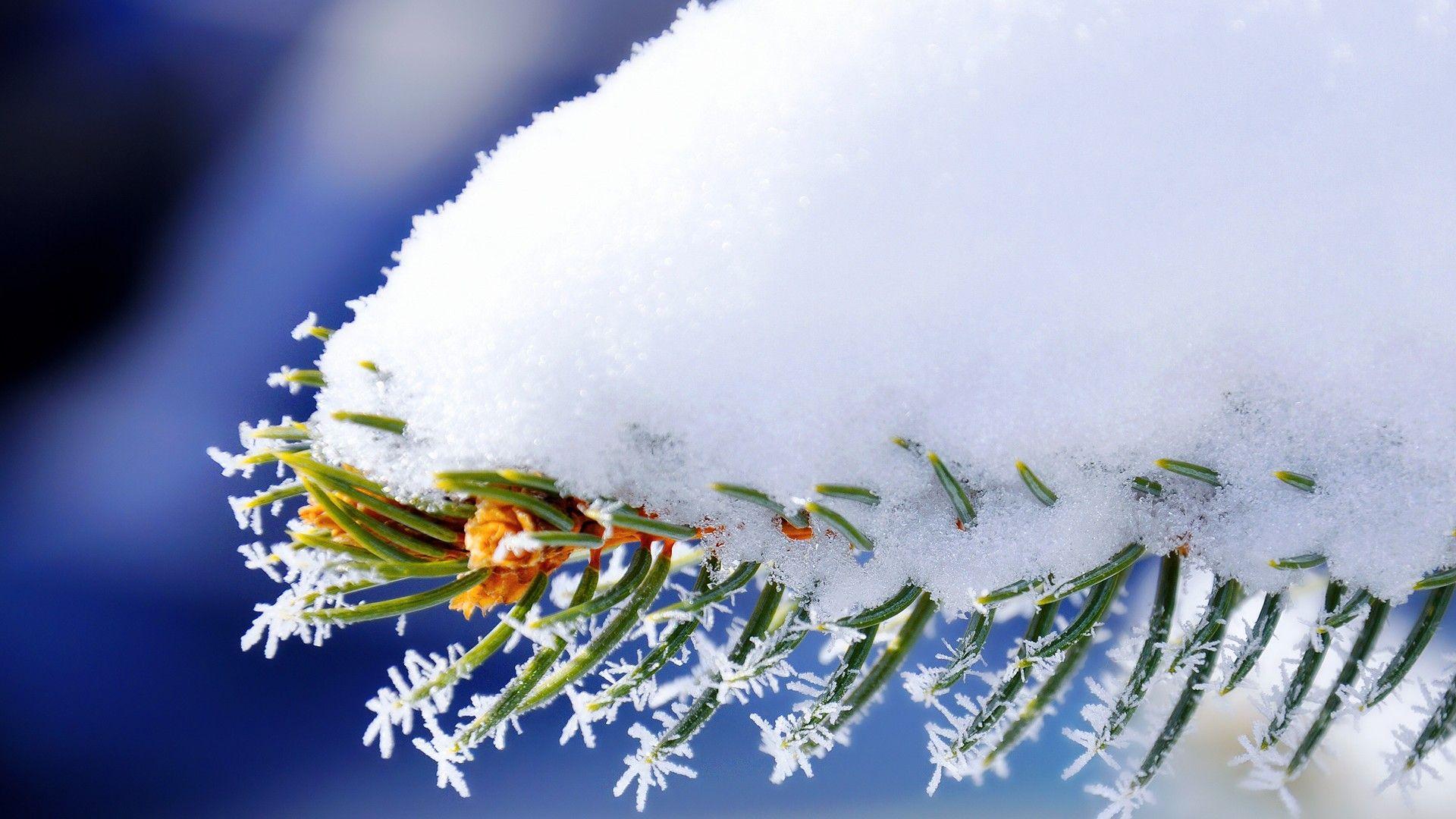 Macro Winter beautiful wallpaper