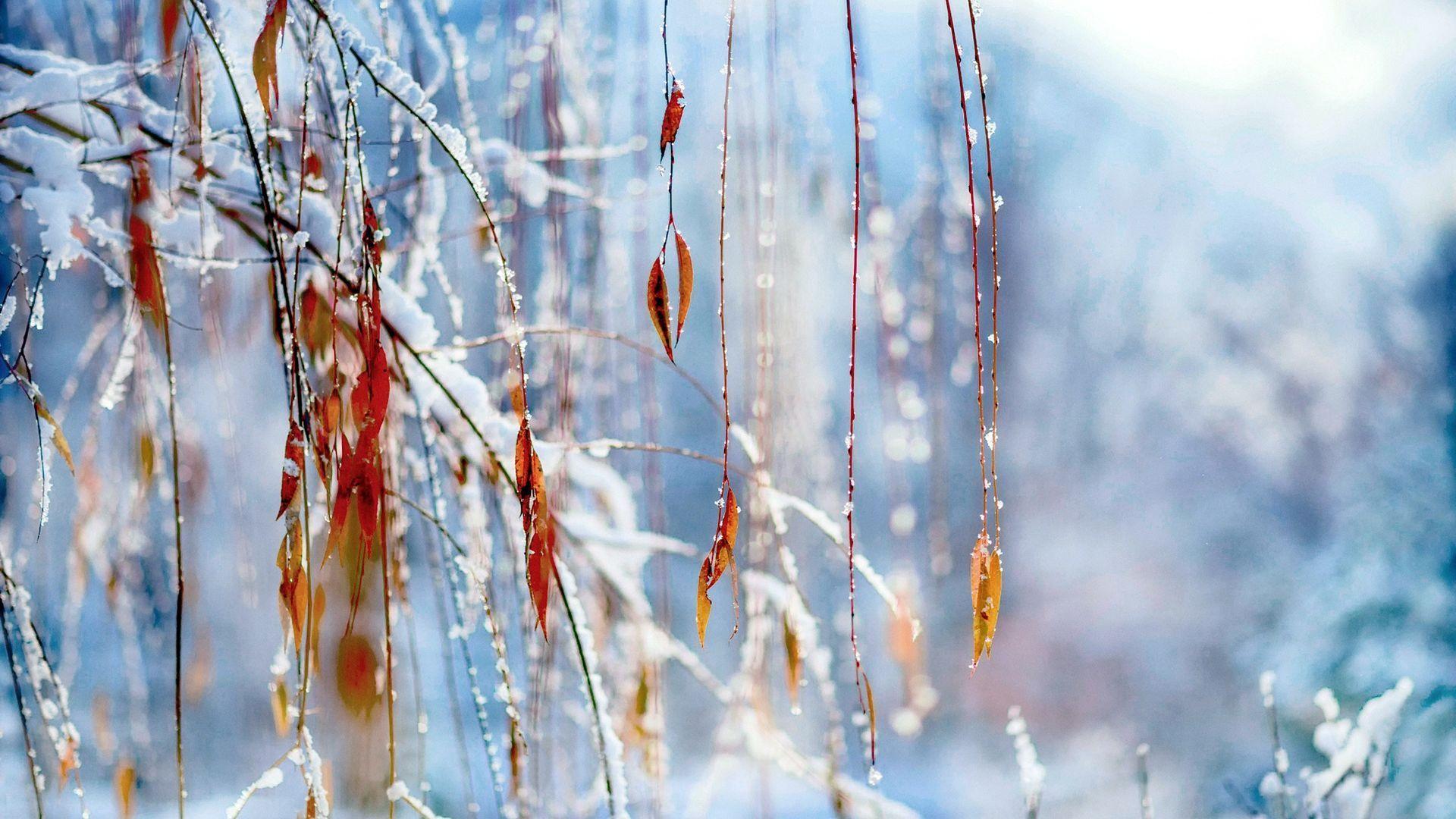 Macro Winter Nice Wallpaper