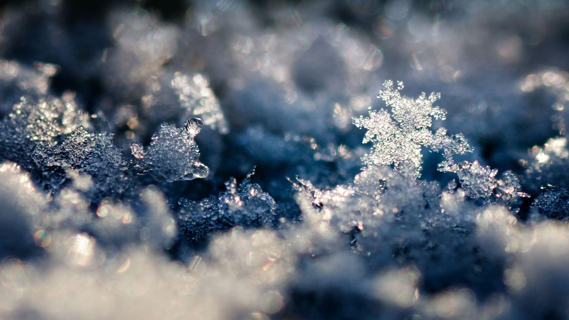 Macro Winter desktop wallpaper