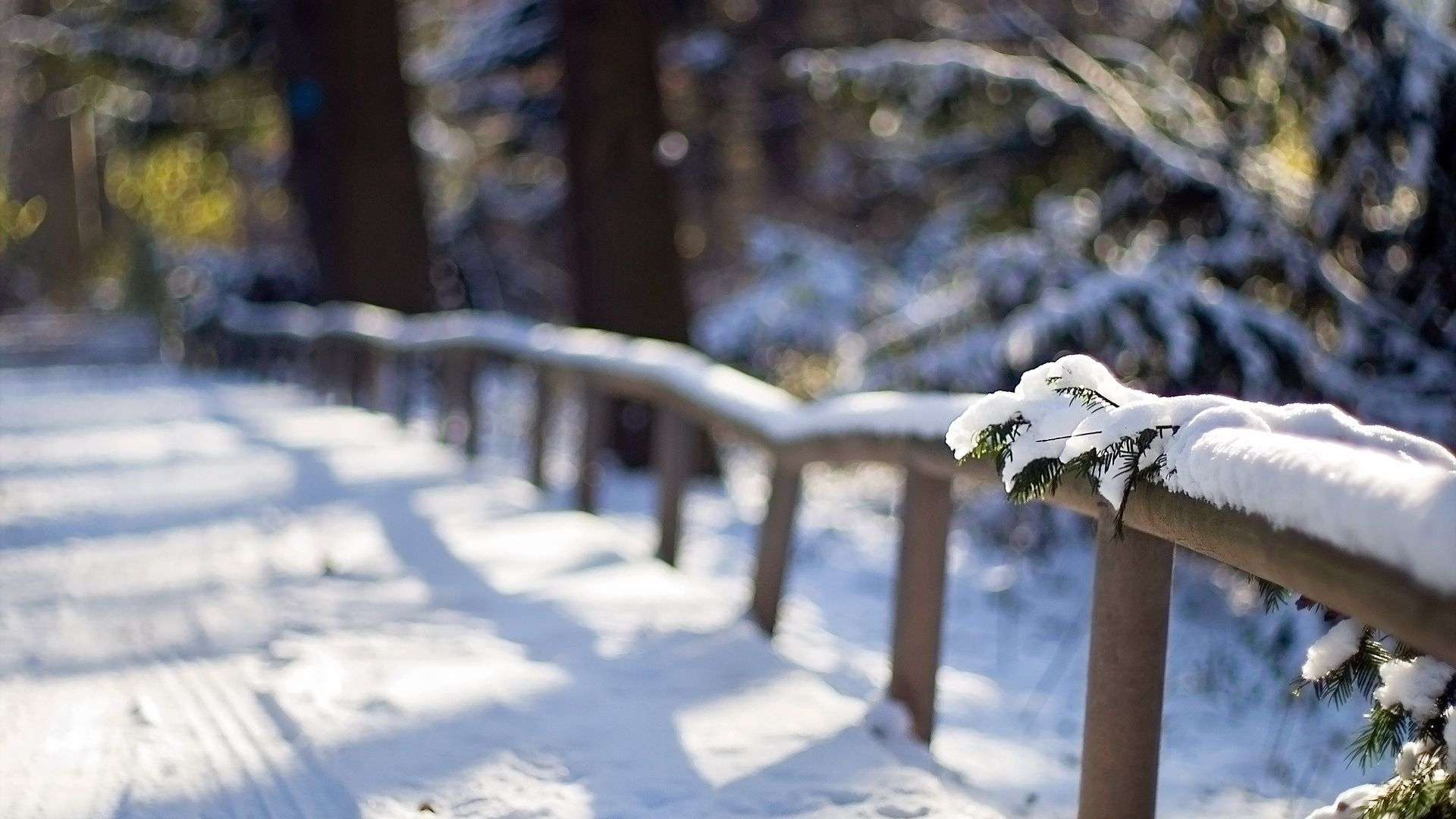 Macro Winter wallpaper picture hd