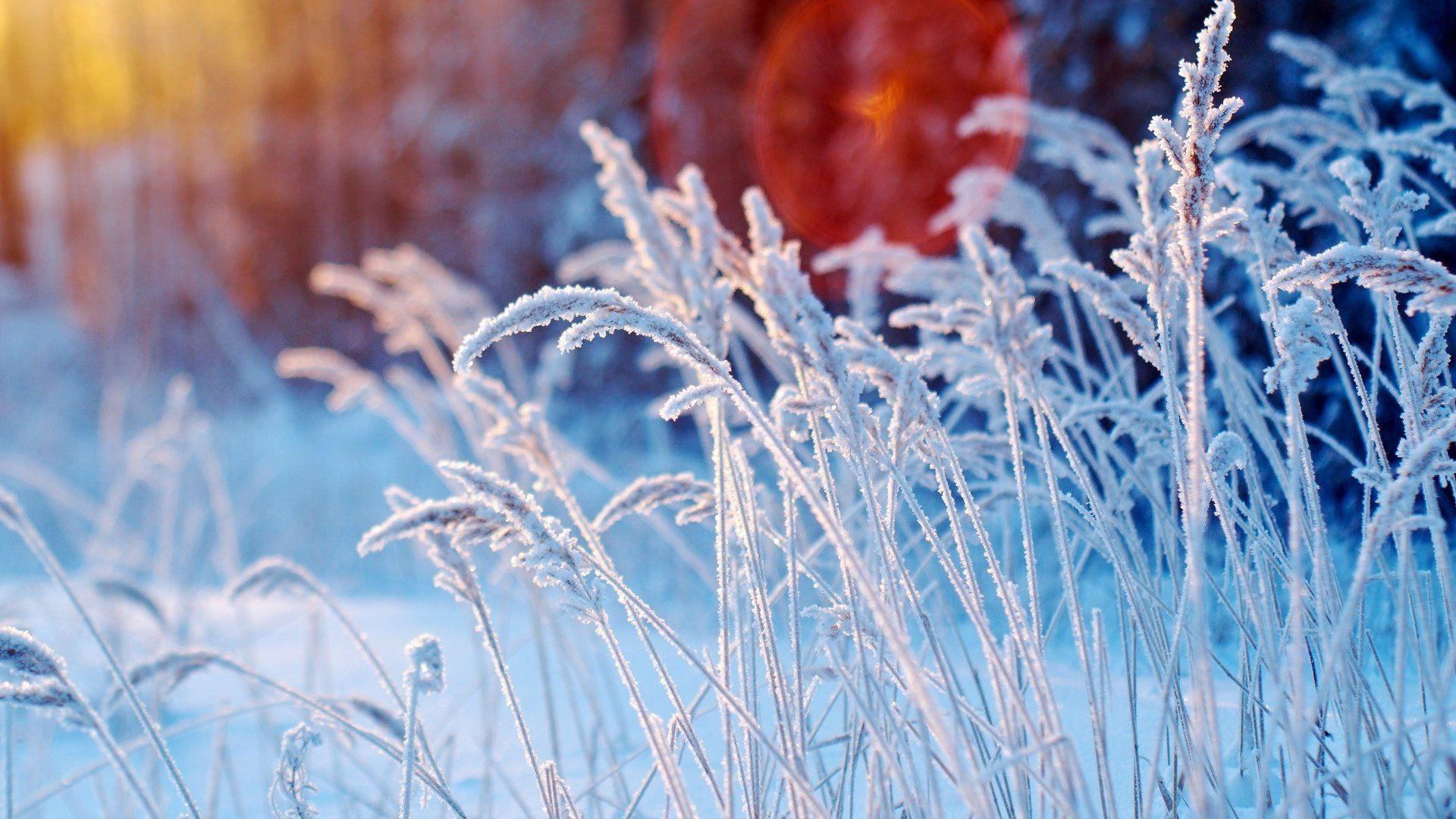 Macro Winter wallpaper image hd