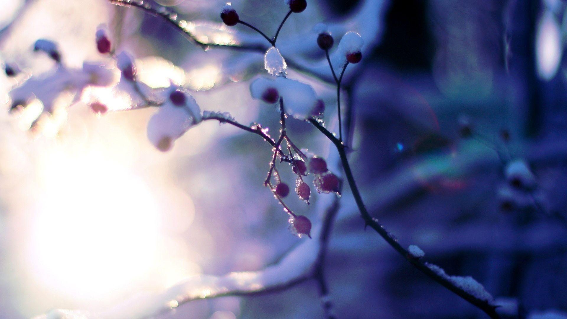 Macro Winter HD Desktop Wallpaper
