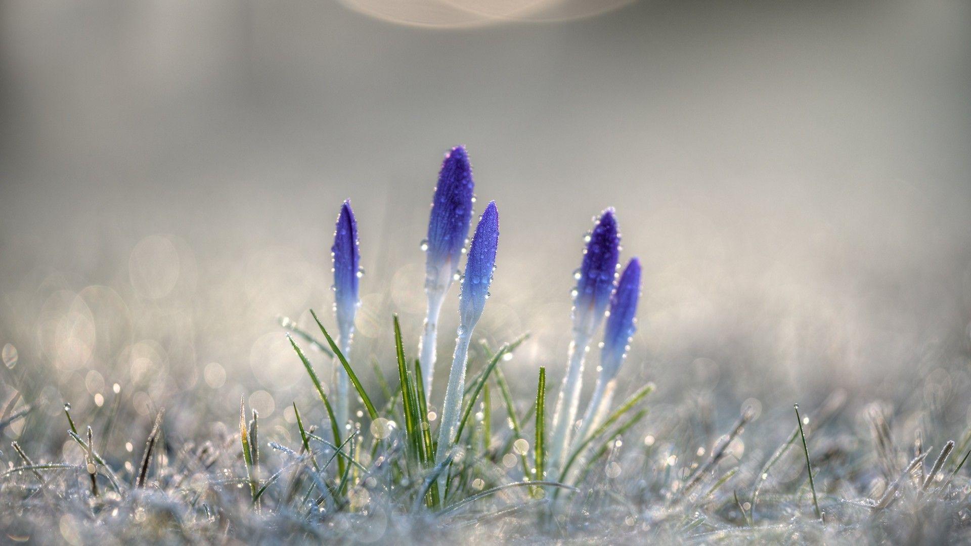 Macro Winter full hd 1080p wallpaper