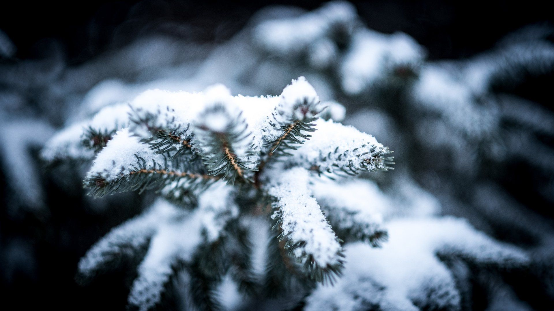 Macro Winter Image