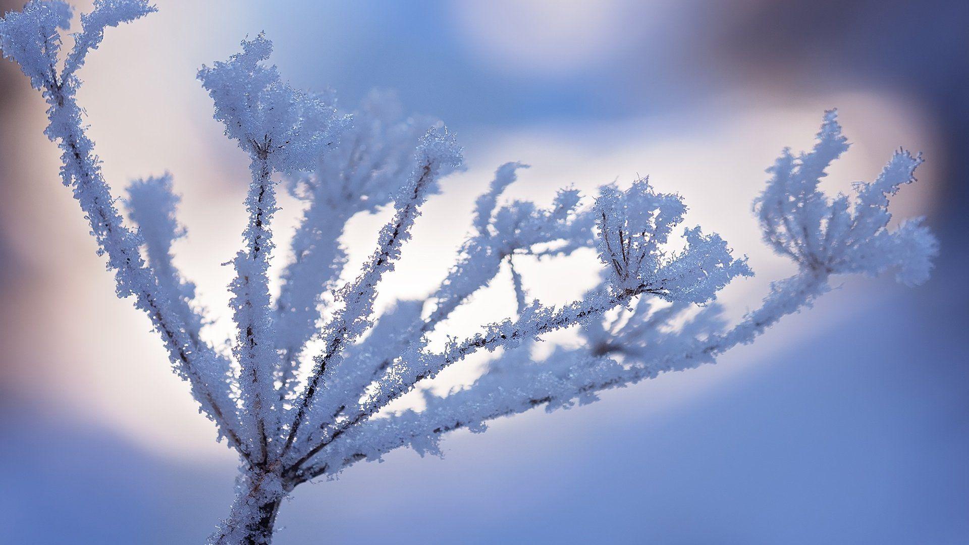 Macro Winter Cool Wallpaper