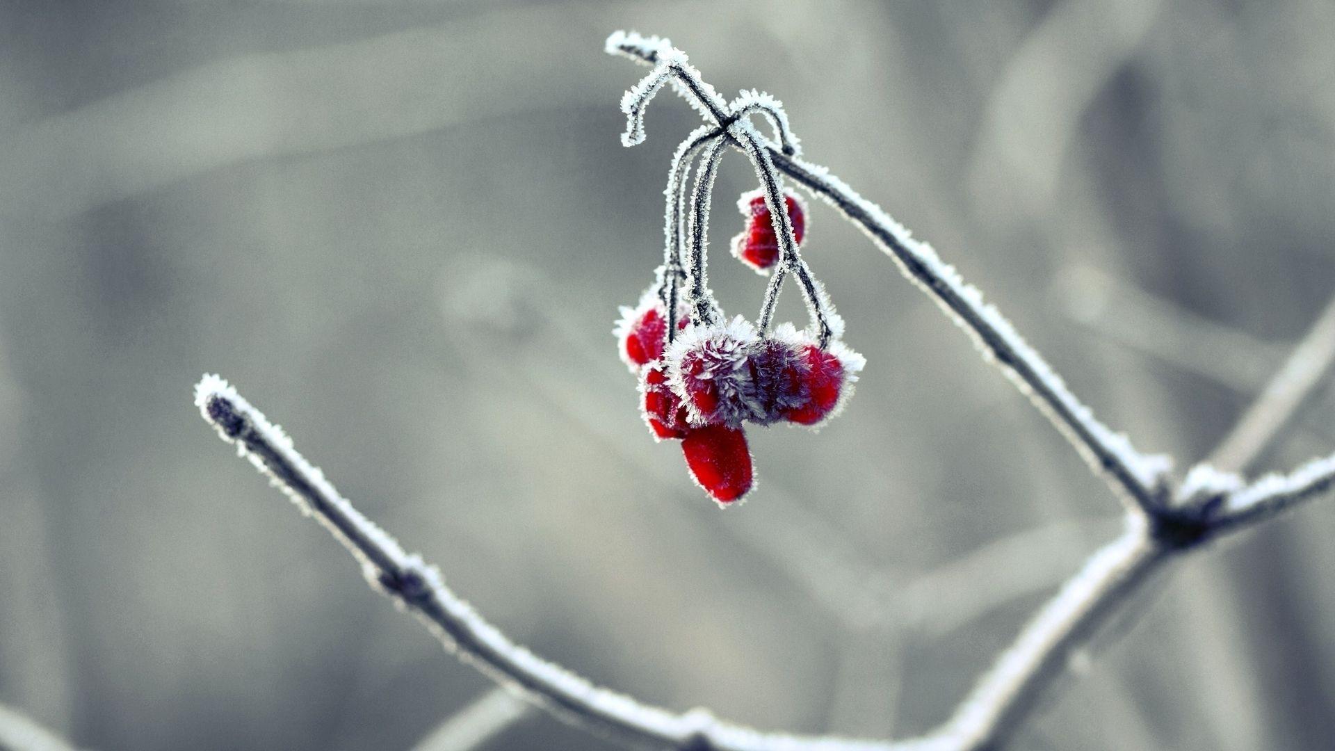 Macro Winter Wallpaper Picture