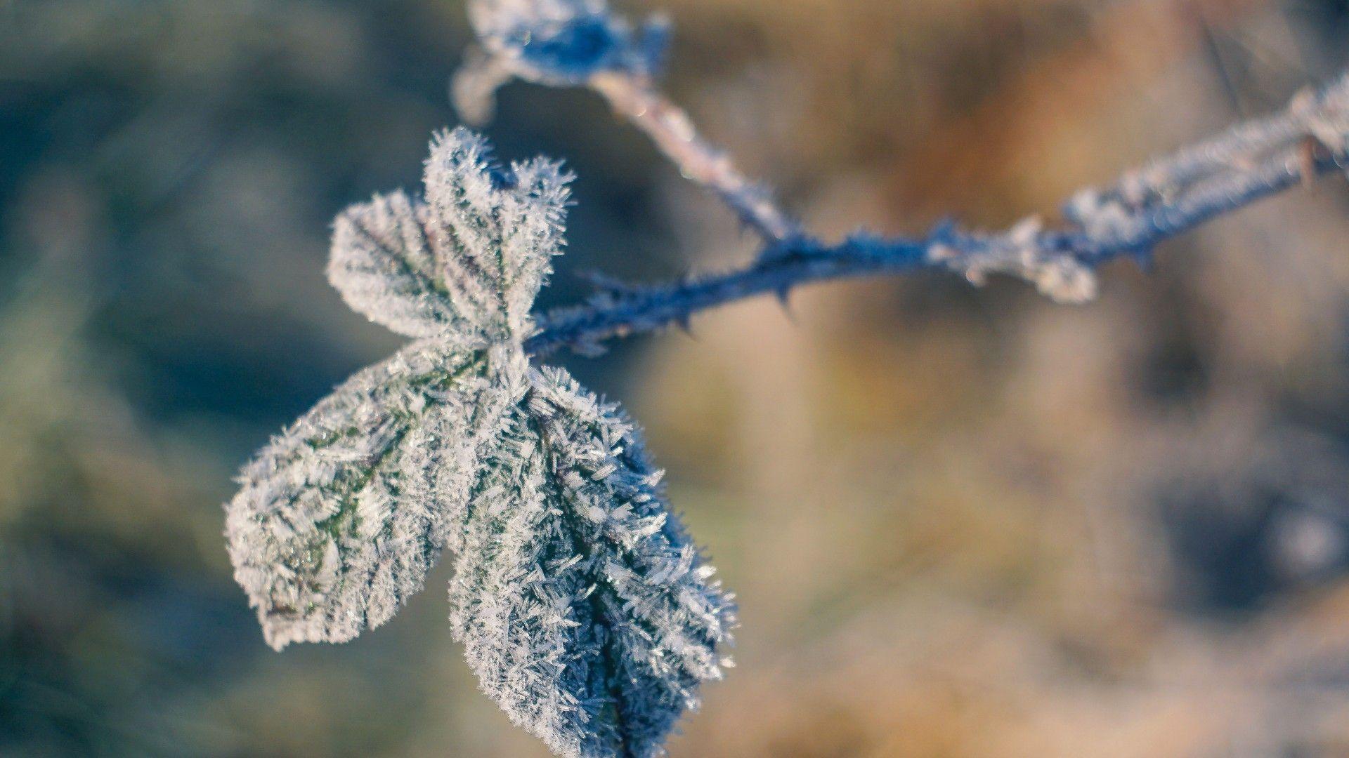Macro Winter 1080p Wallpaper