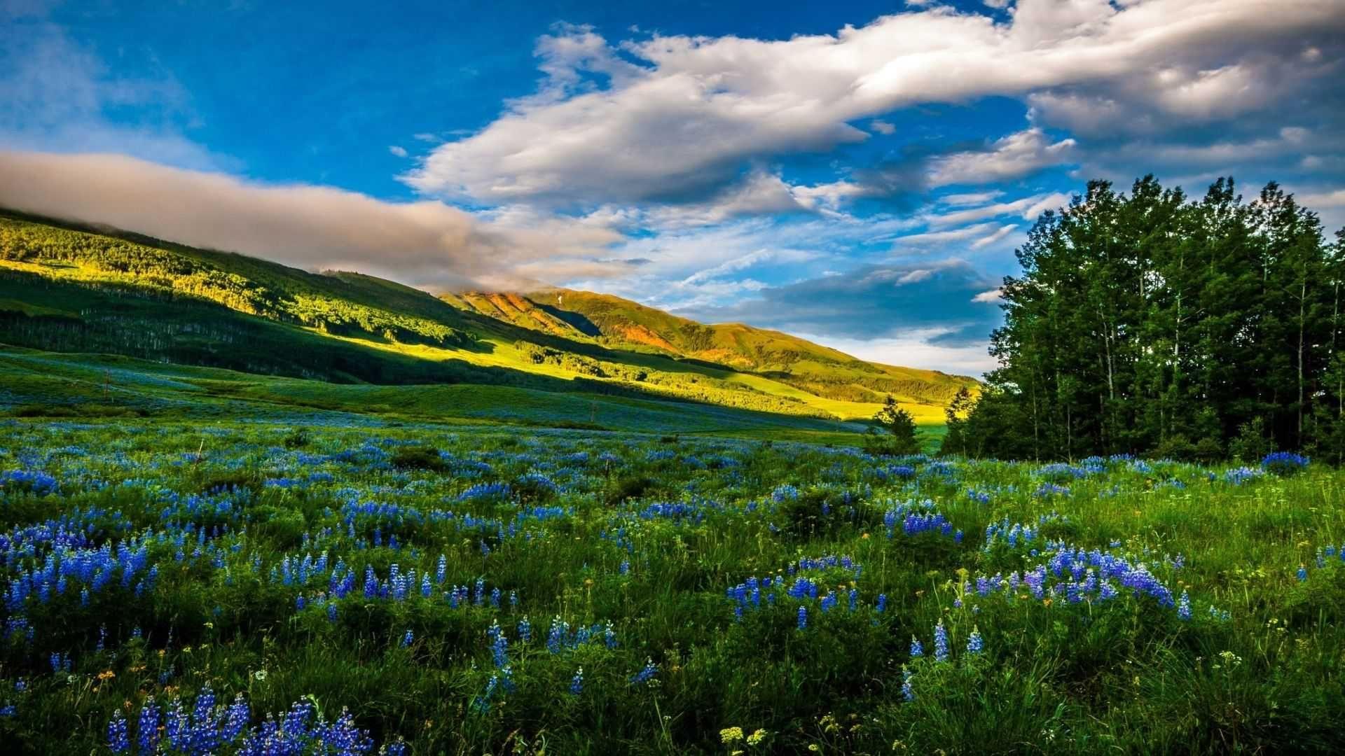 Meadow PC Wallpaper HD