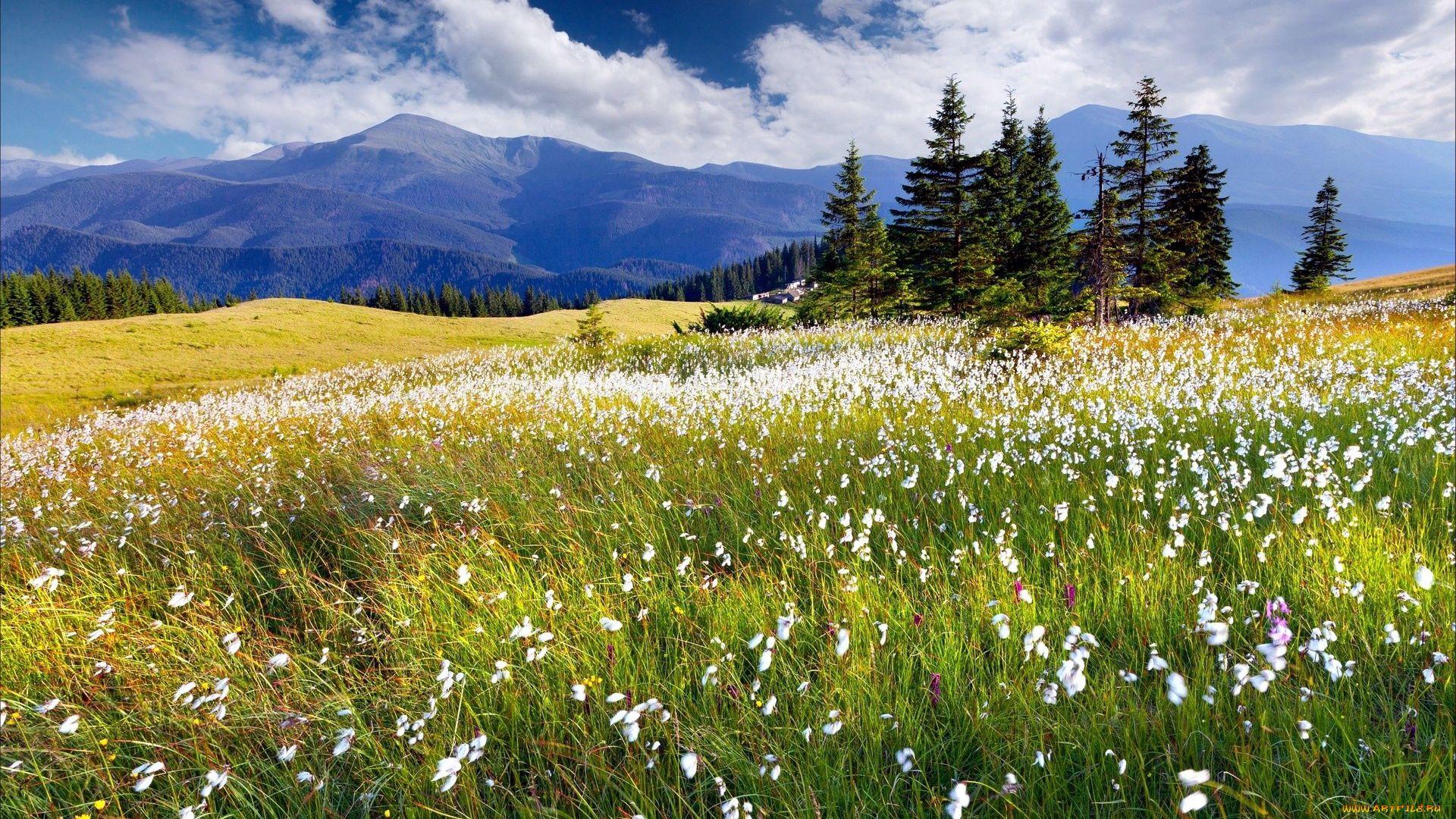 Meadow good wallpaper hd