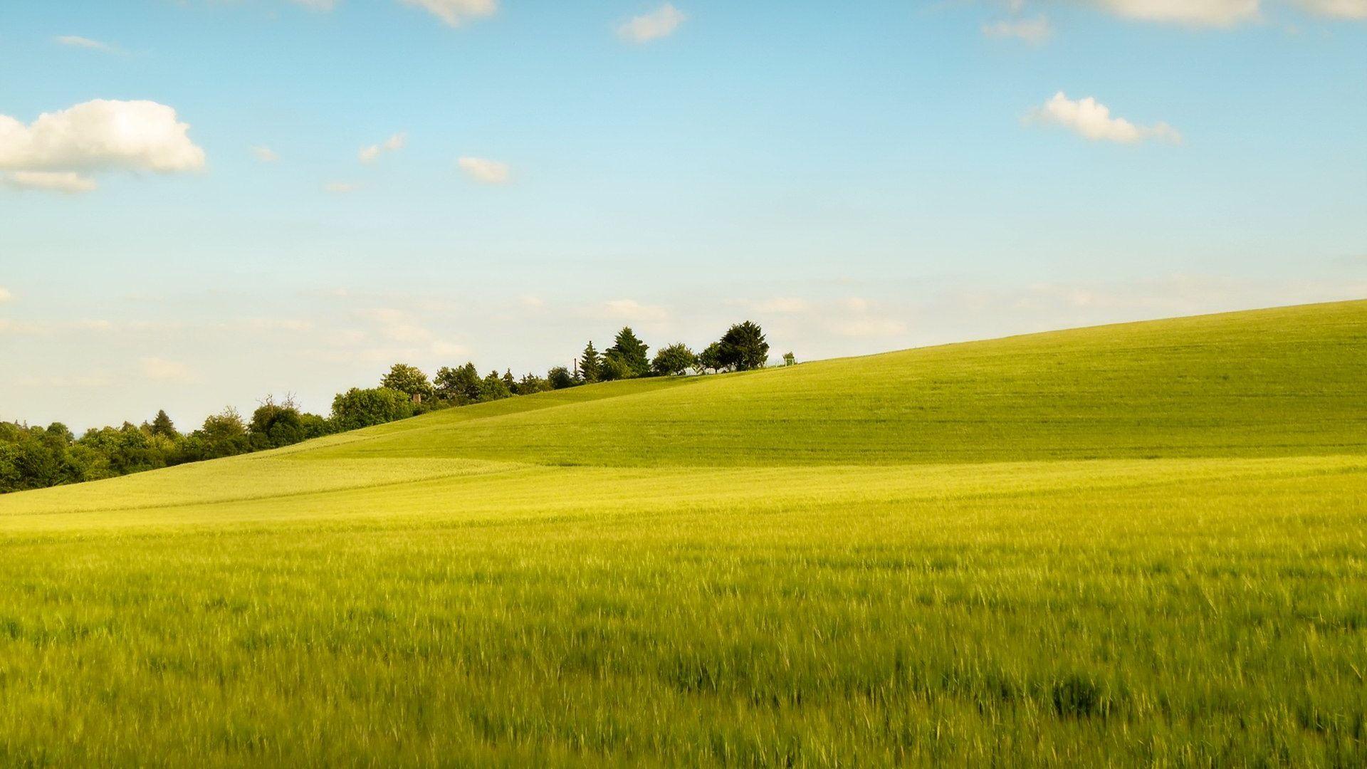 Meadow pc wallpaper