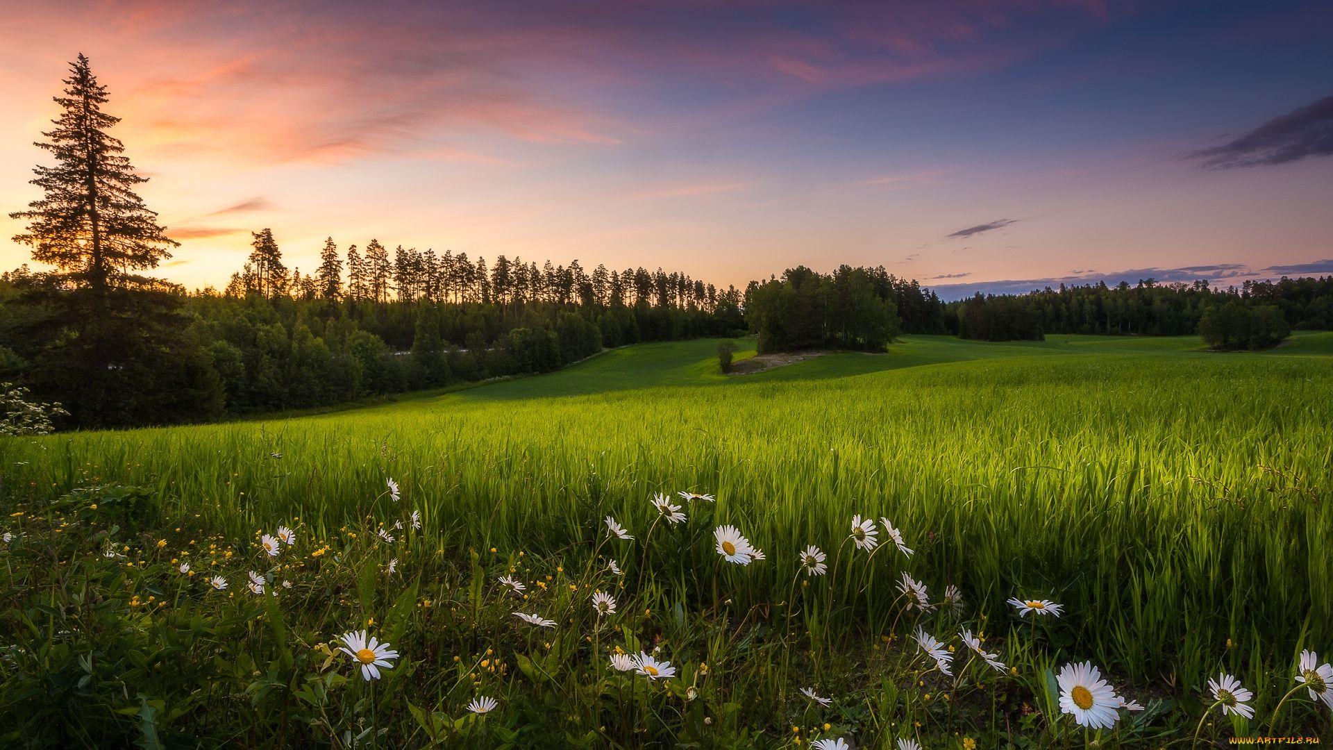 Meadow Download Wallpaper