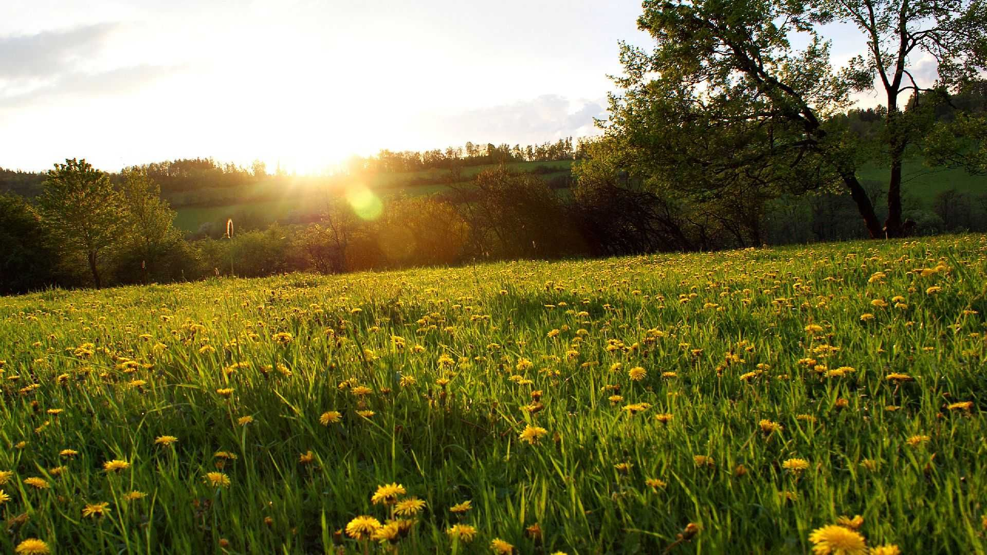 Meadow download free wallpapers for pc in hd