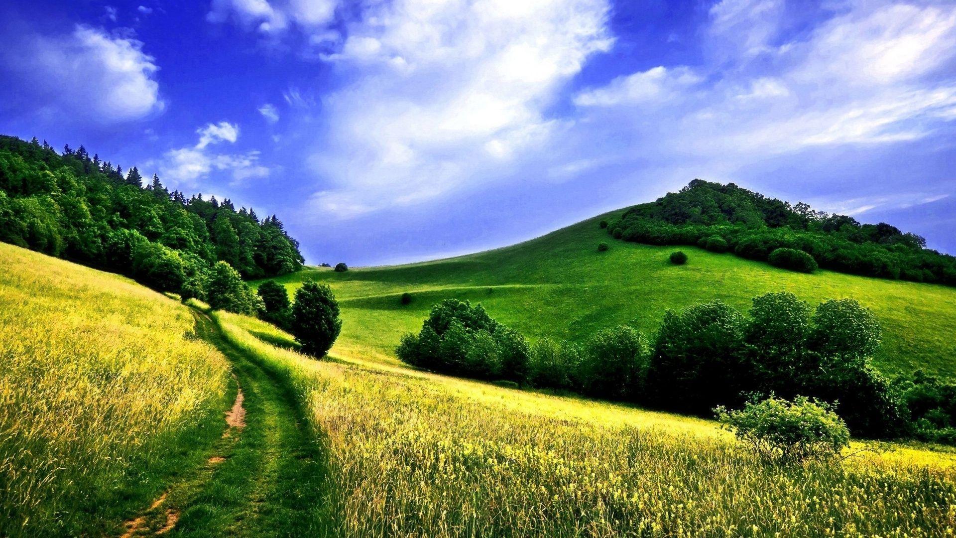 Meadow desktop wallpaper
