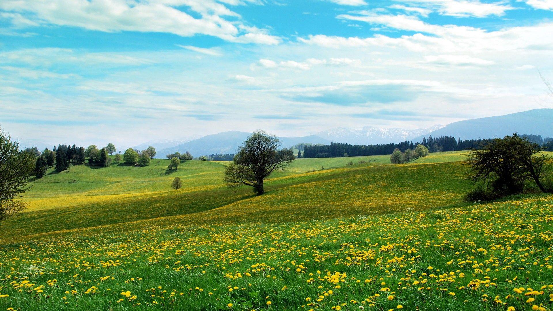 Meadow a wallpaper