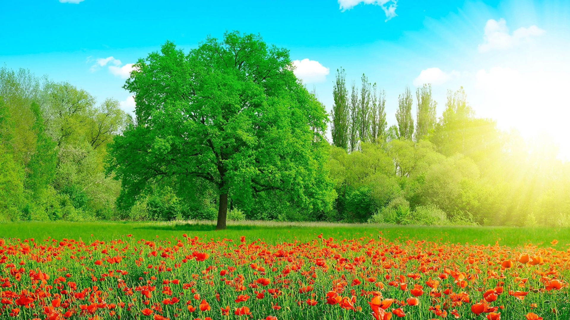 Meadow Wallpaper Picture
