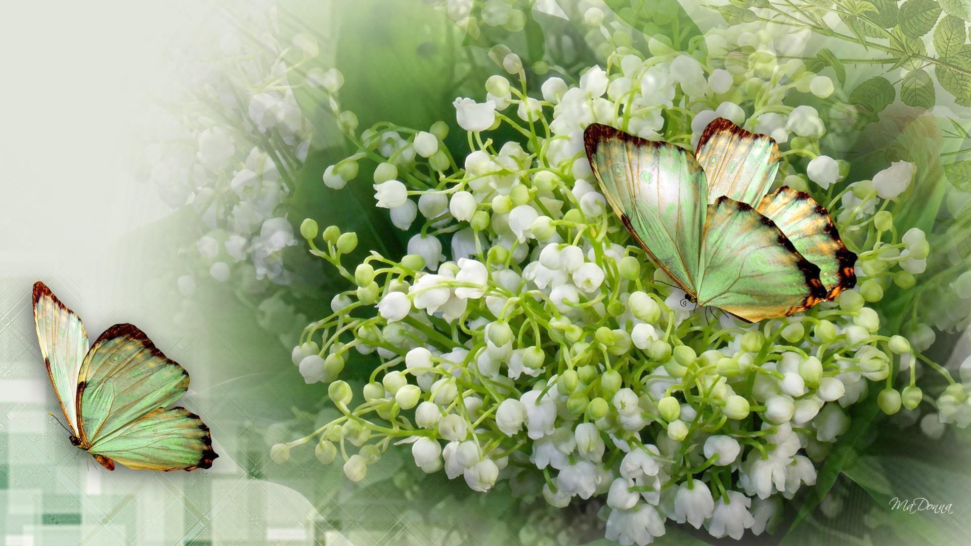 Muguet Flower background wallpaper