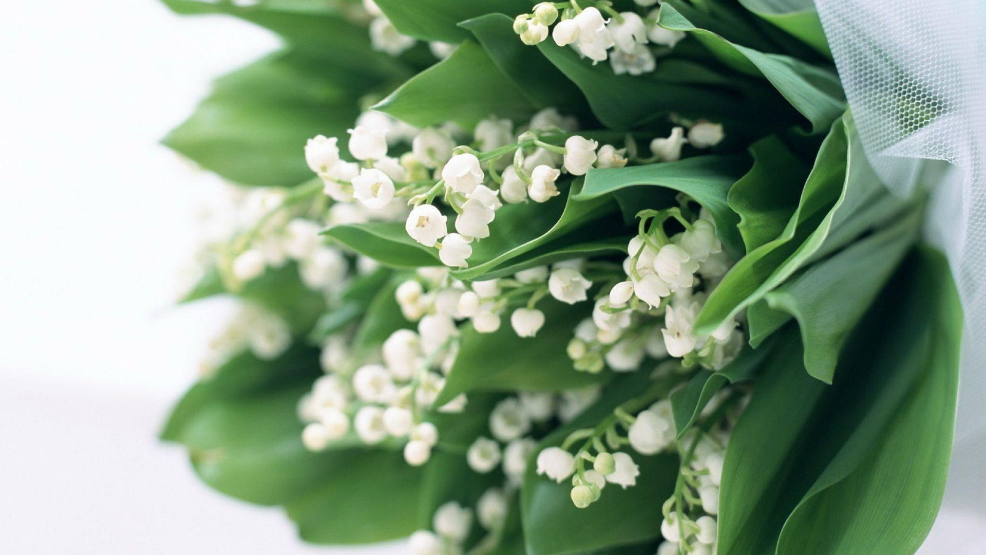 Muguet Flower 1920x1080 wallpaper