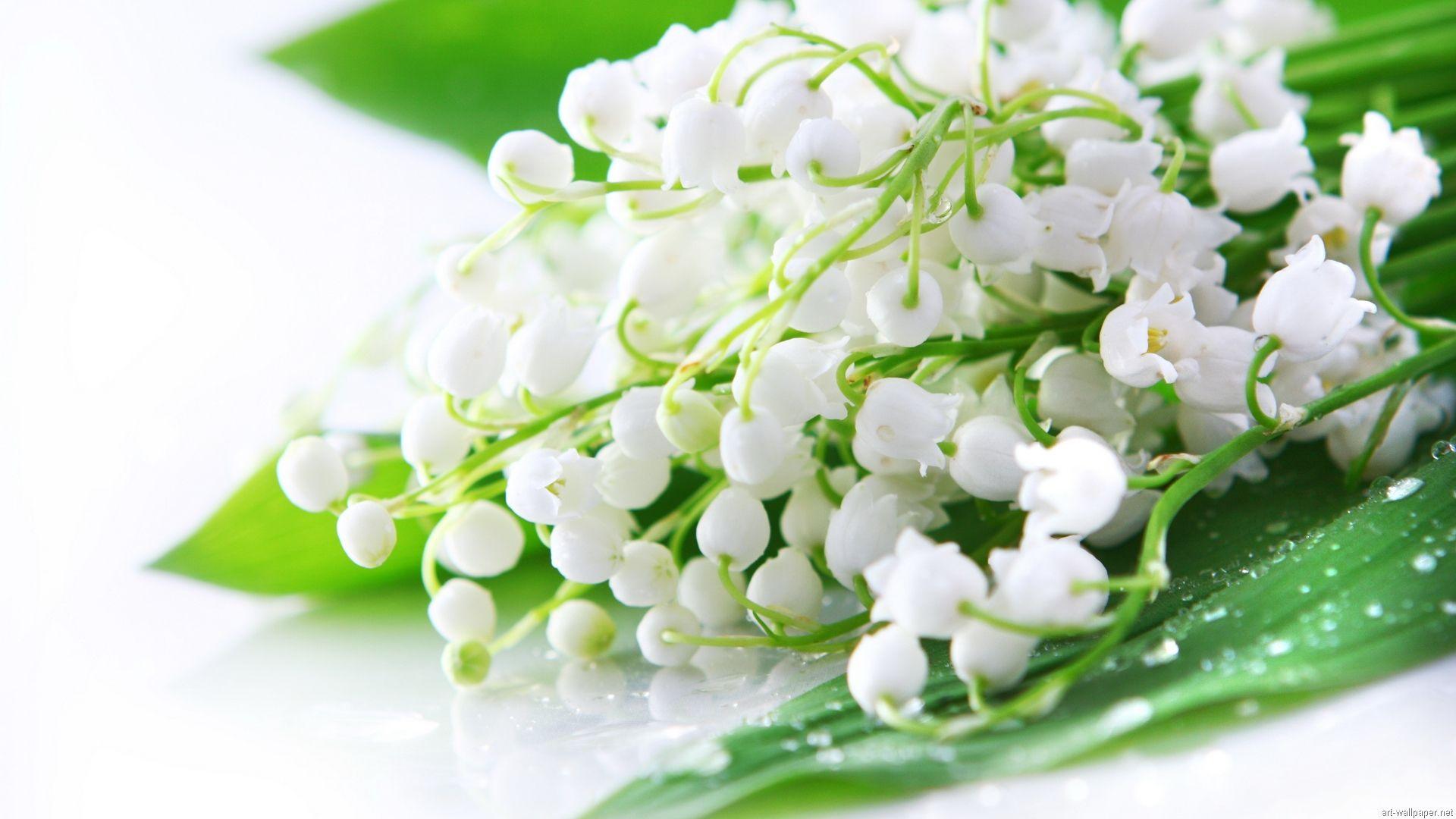 Muguet Flower full hd 1080p wallpaper