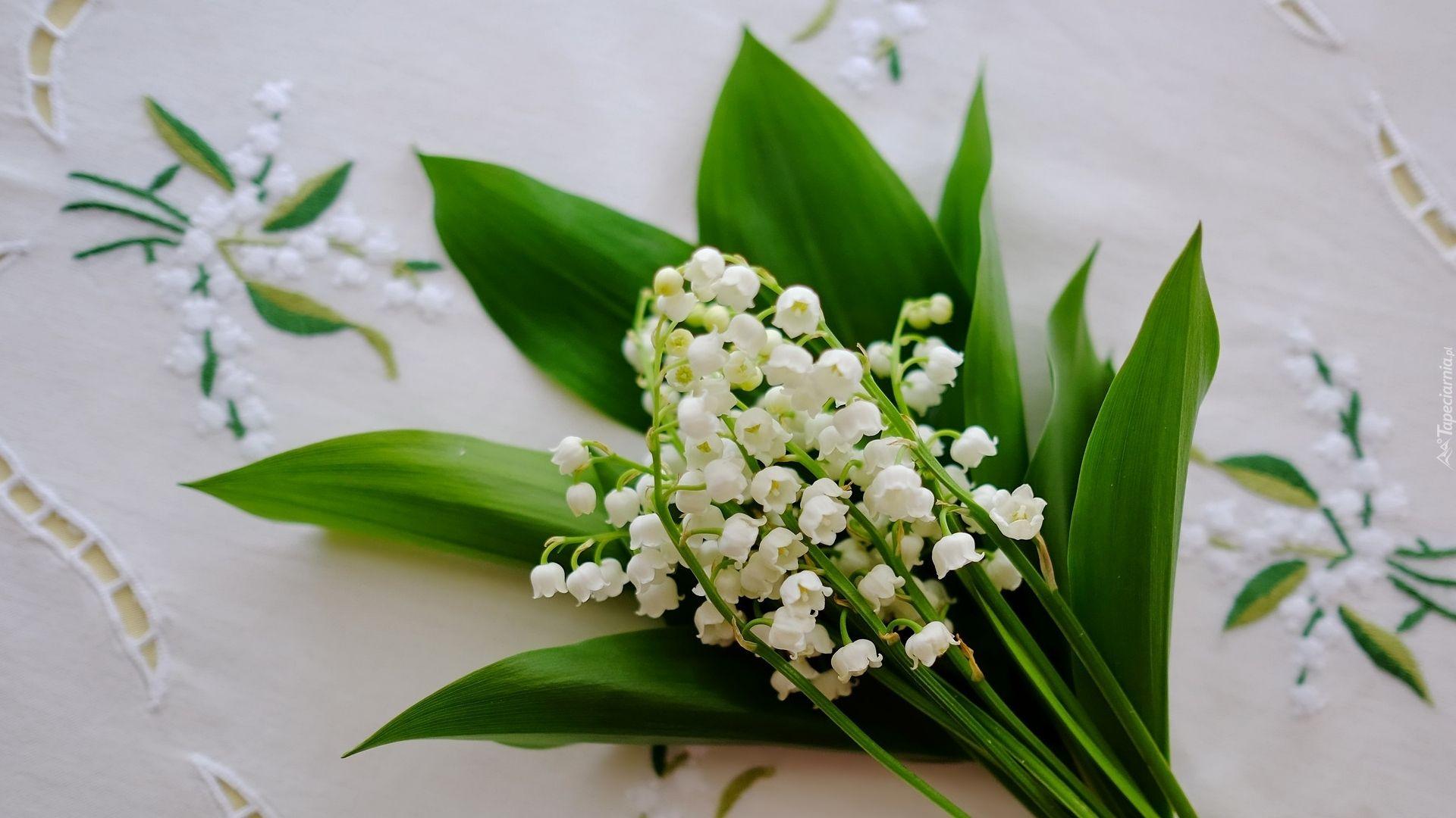 Muguet Flower free hd wallpaper