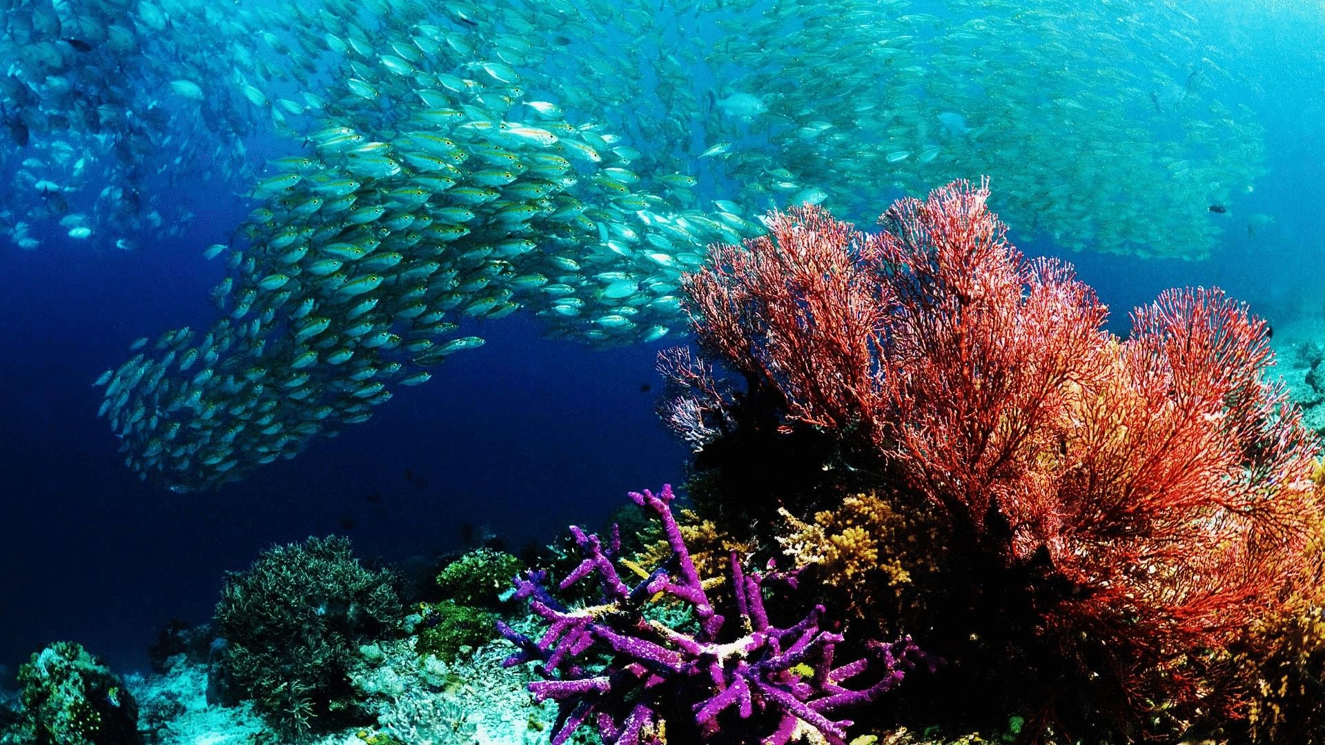 Ocean Themed download free wallpaper image search