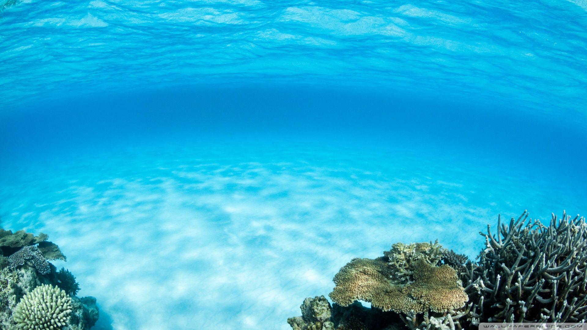 Ocean Themed High Quality