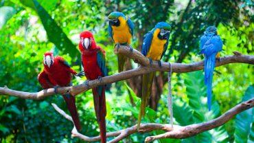 Parakeet free download wallpaper