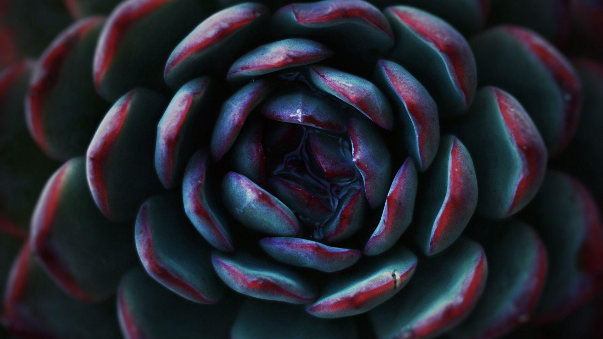 Succulent Cool HD Wallpaper