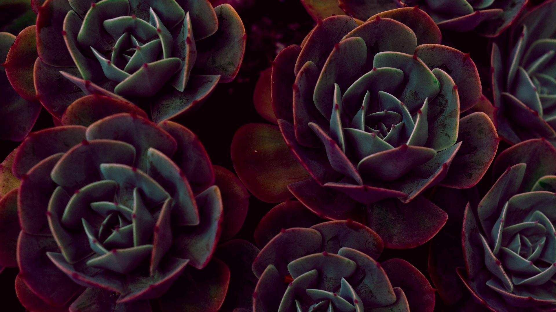 Succulent Good Wallpaper