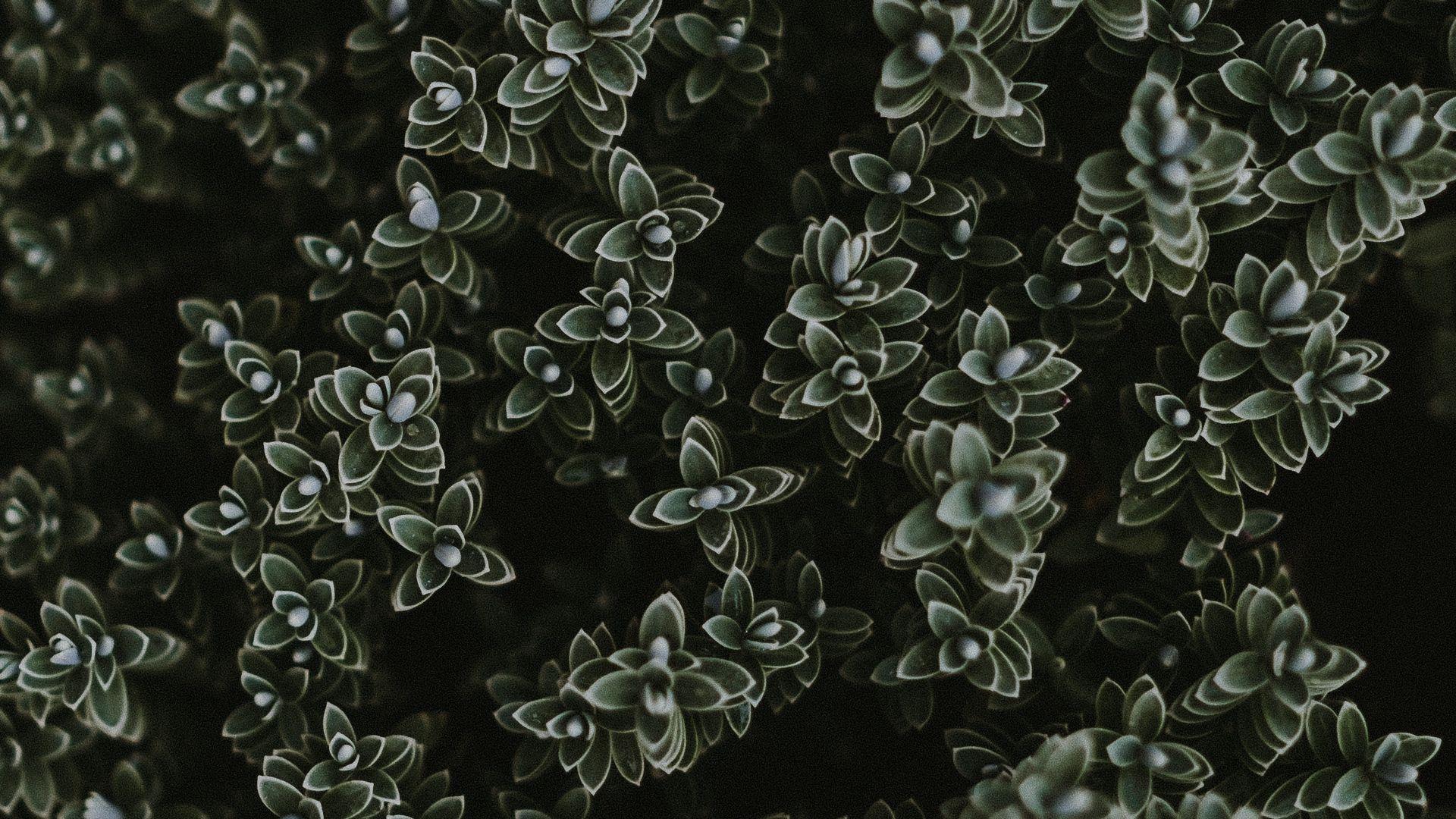 Succulent Desktop Wallpaper