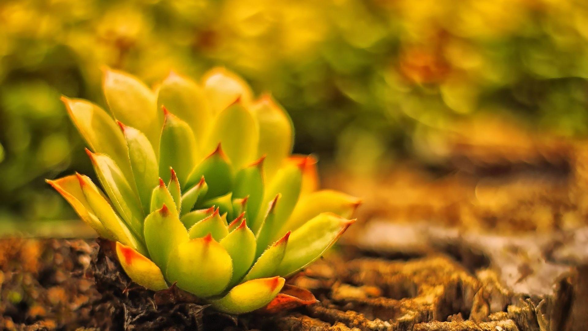 Succulent Download Wallpaper