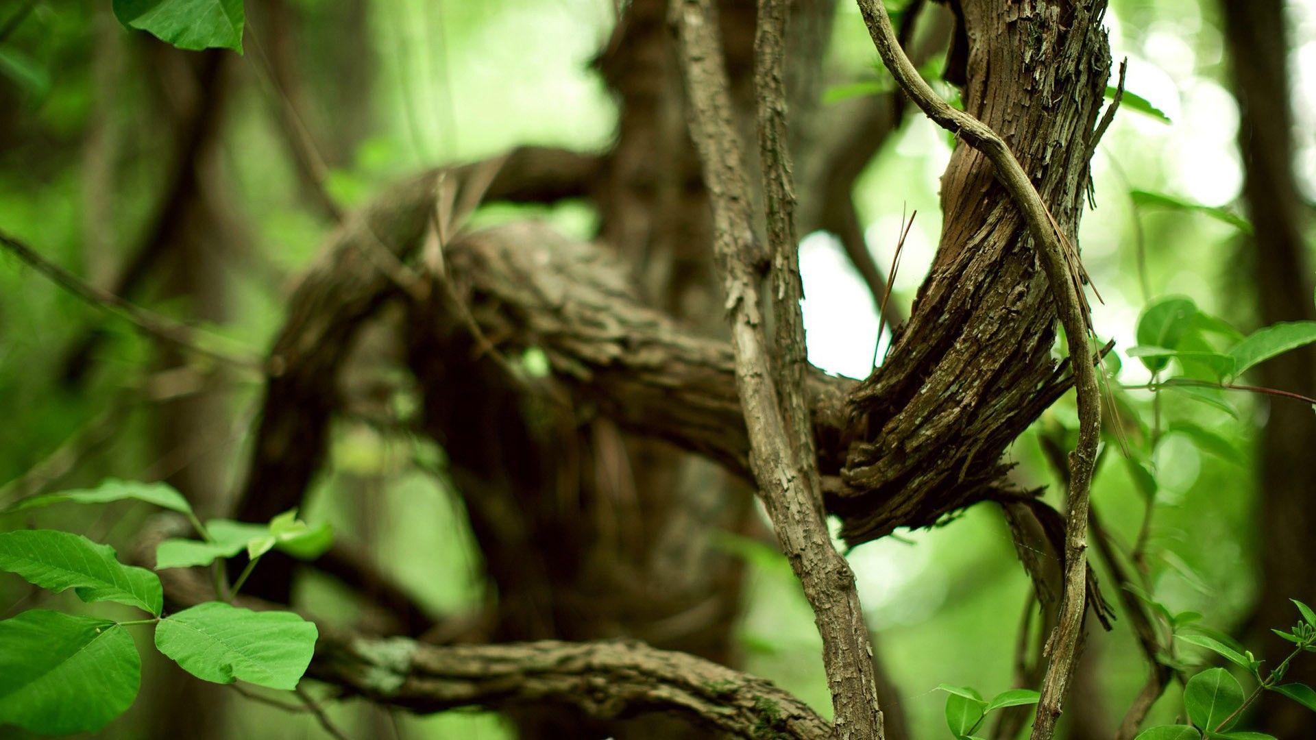 Tree Branch laptop wallpaper