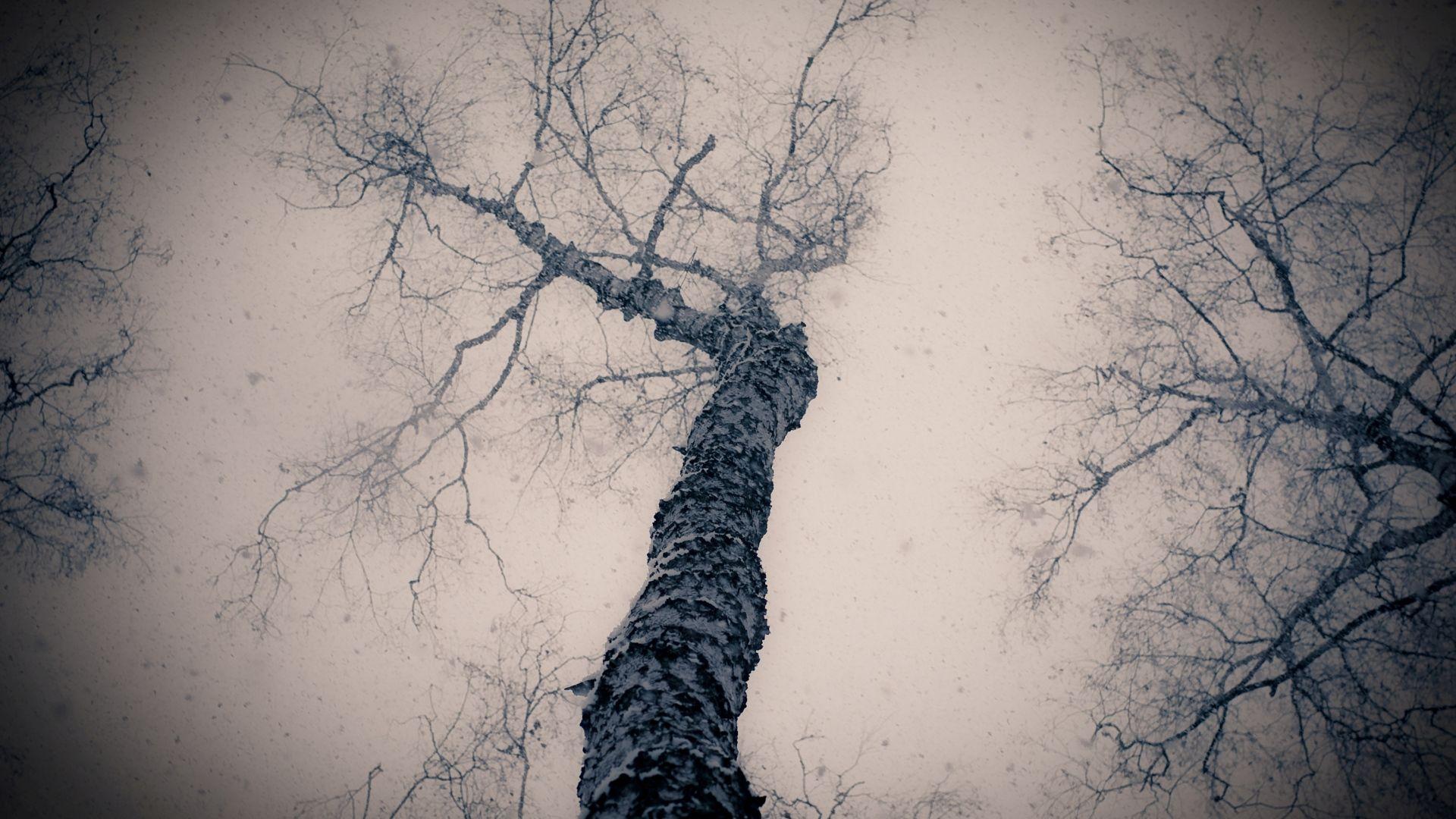 Tree Branch Wallpaper Theme