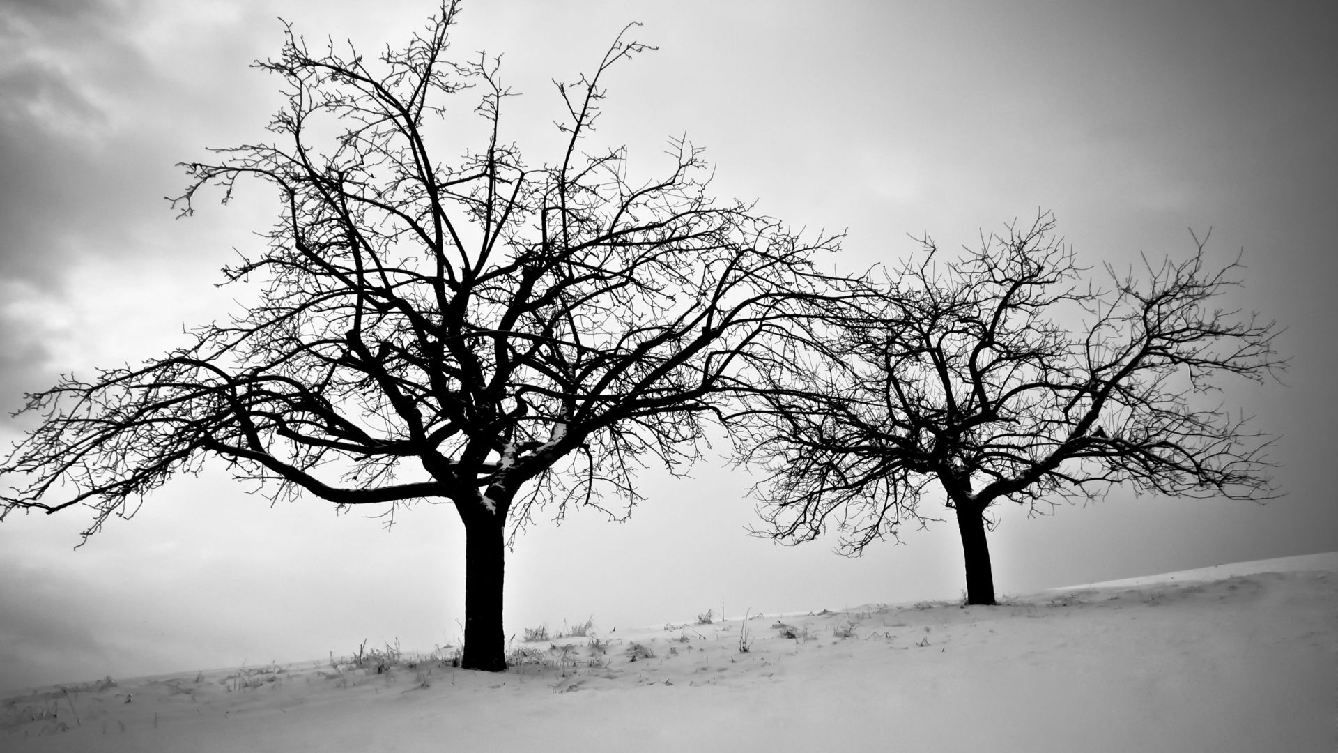 Tree Branch Download Wallpaper