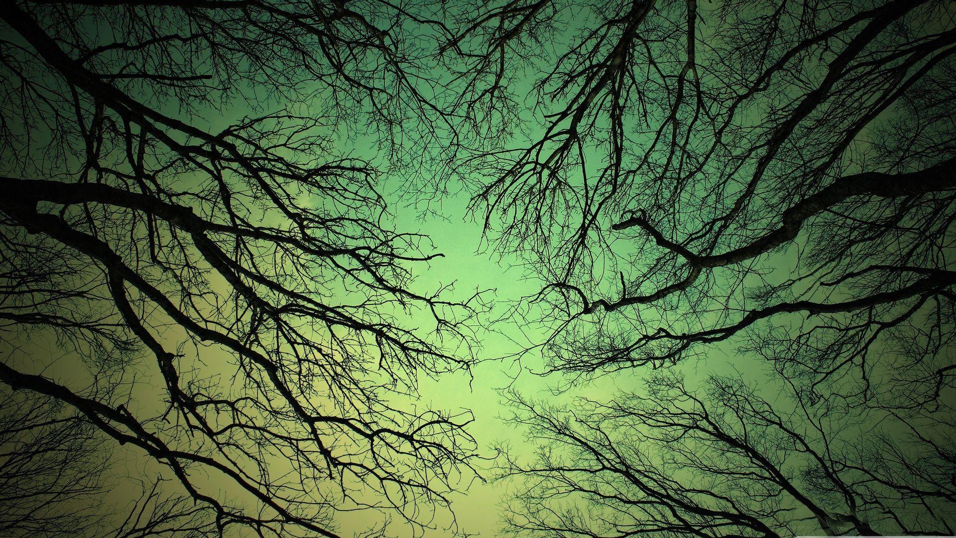 Tree Branch Free Wallpaper
