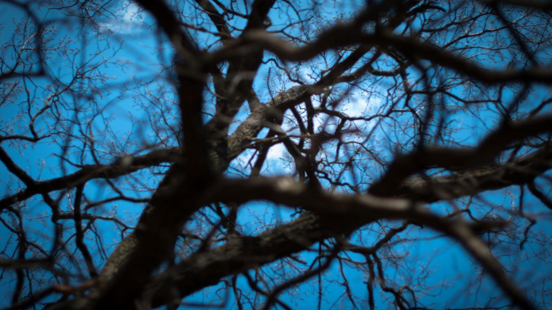 Tree Branch best Wallpaper