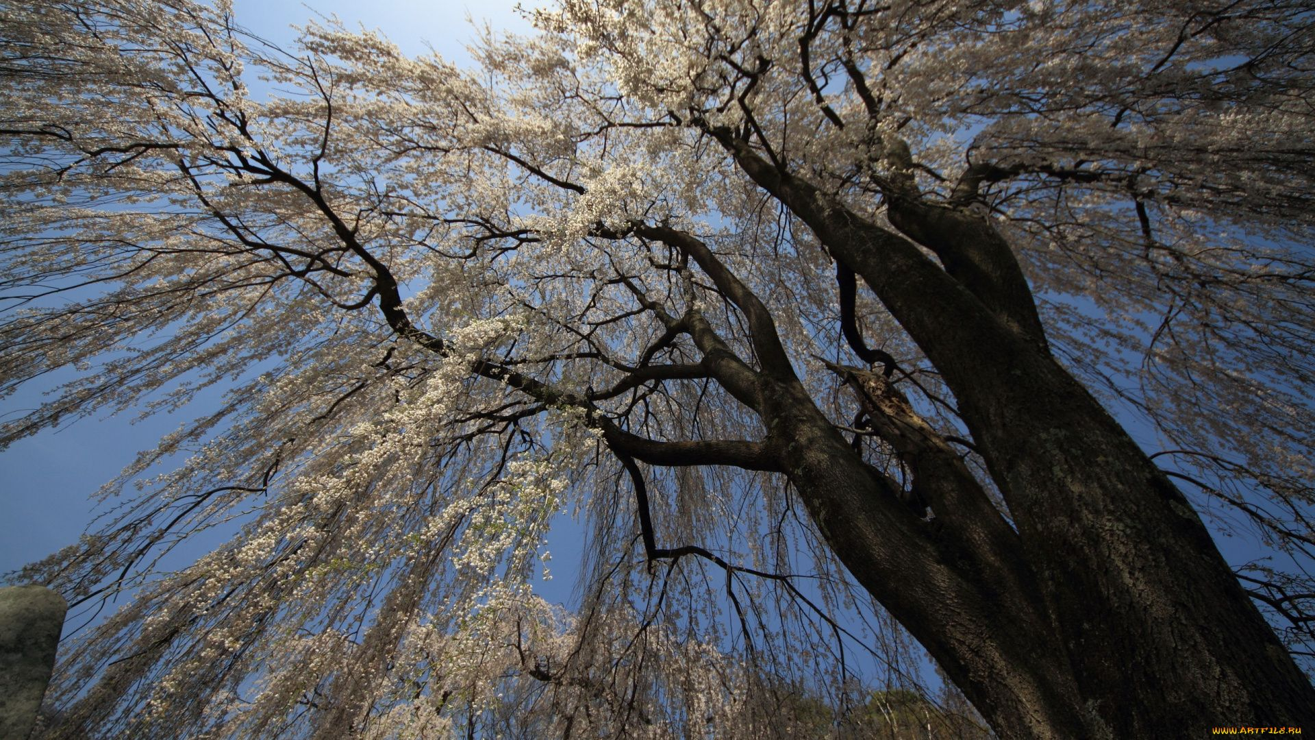 Tree Branch download free wallpapers for pc in hd