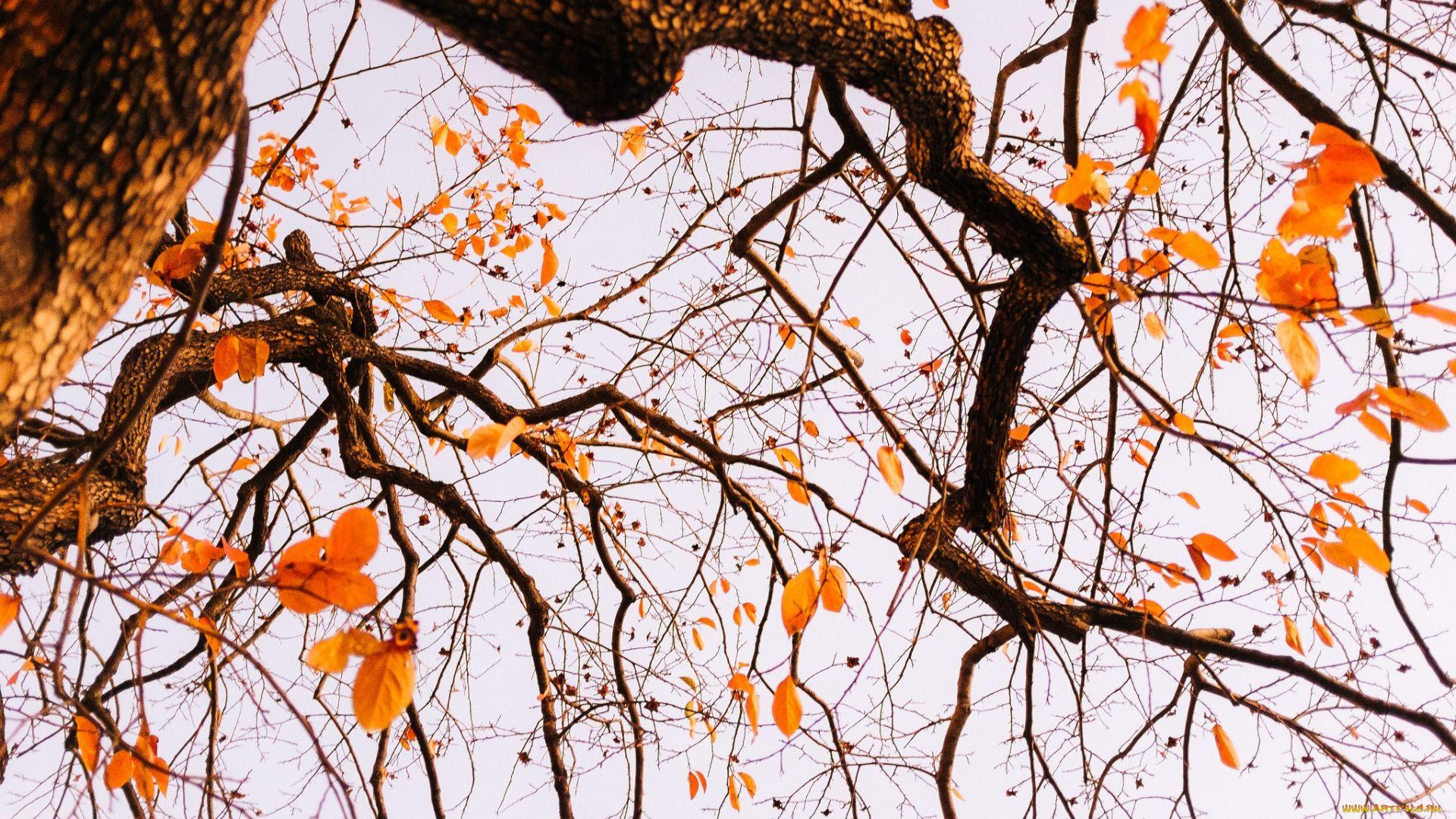 Tree Branch PC Wallpaper